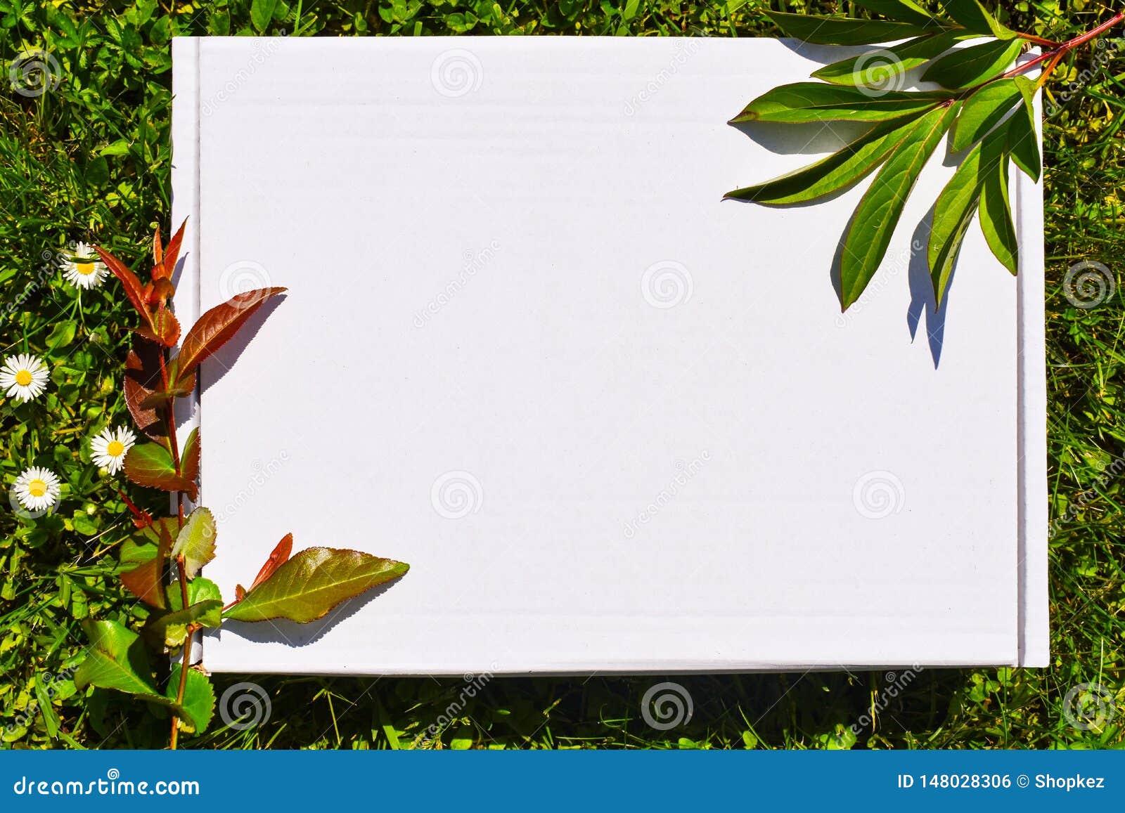 Azione disegnate photograpjy, archivio digitale del modello Quadrato in bianco per l opera d arte con il fondo dei fiori bianchi