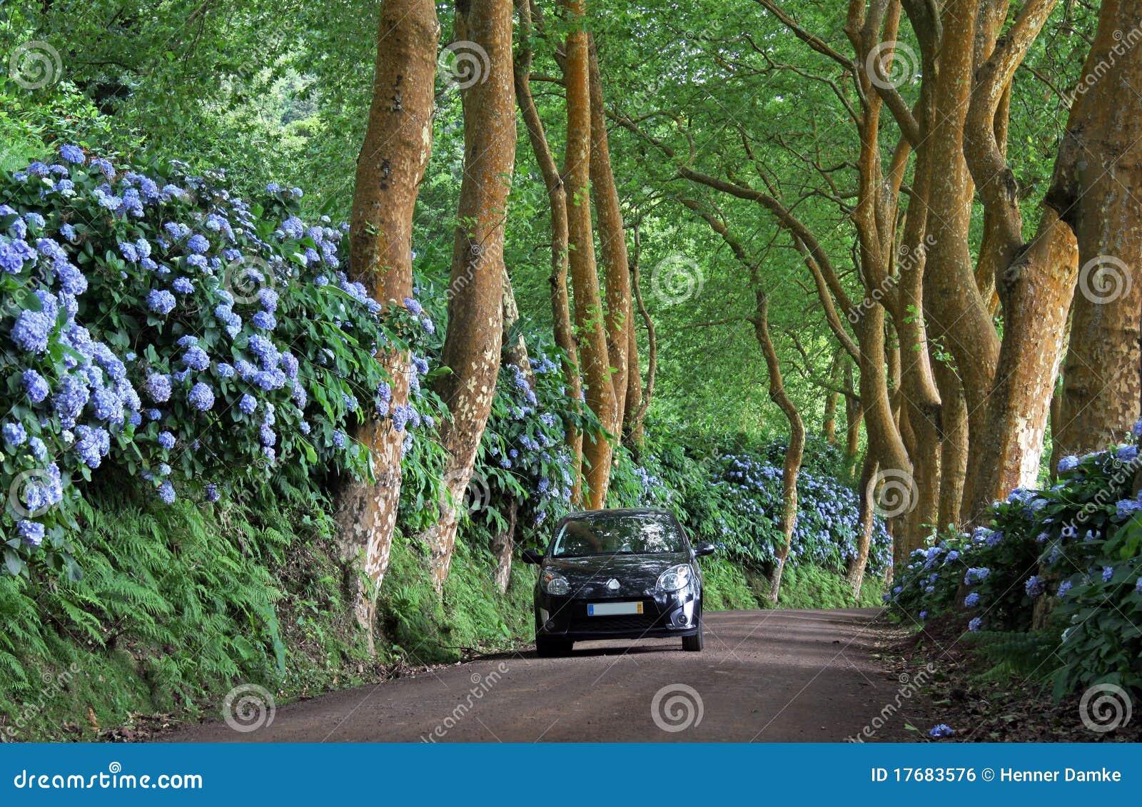 Azores samochodowa osamotniona drogi strona