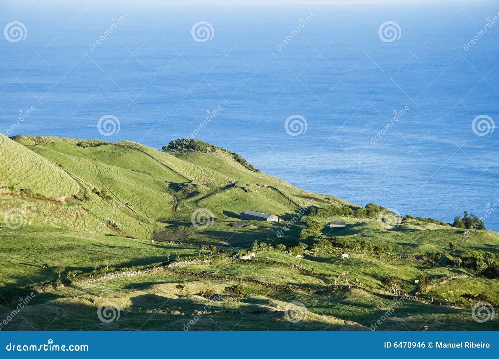 Azory, wyspy pico krajobrazu pastwiska