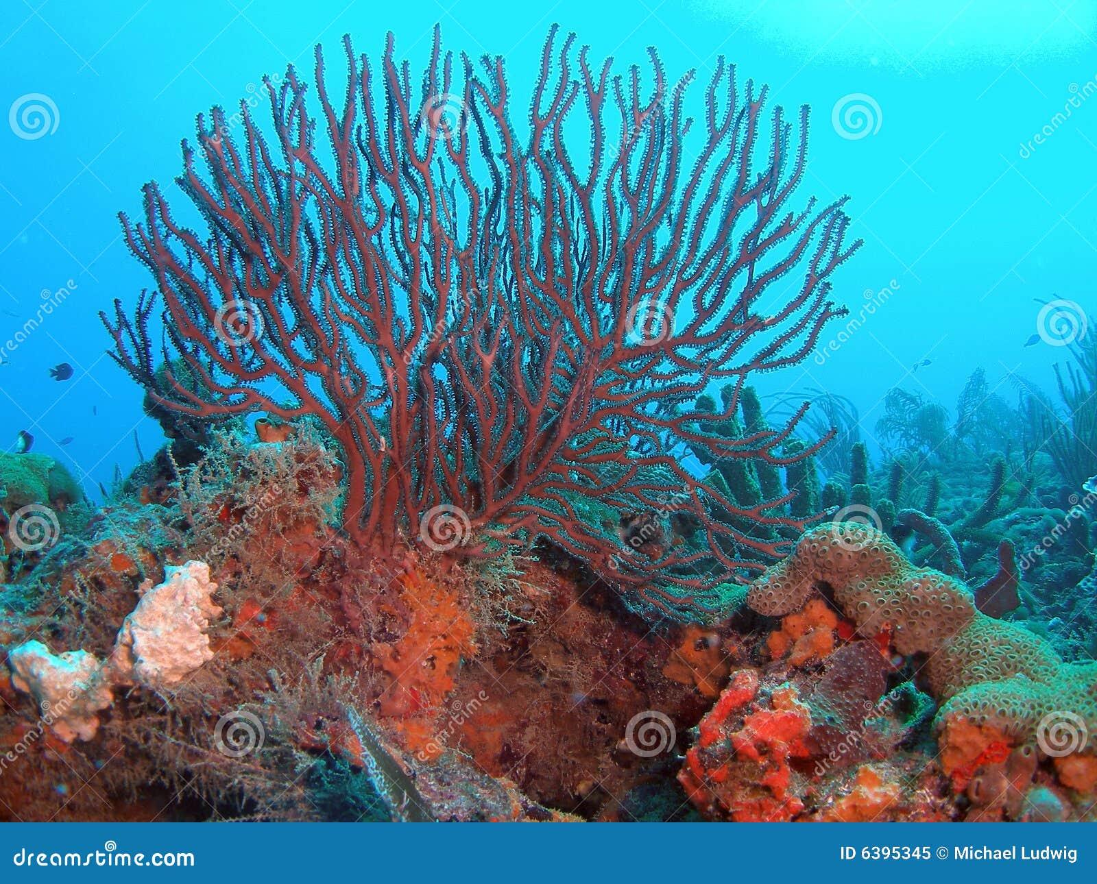 Azote del mar en un filón coralino