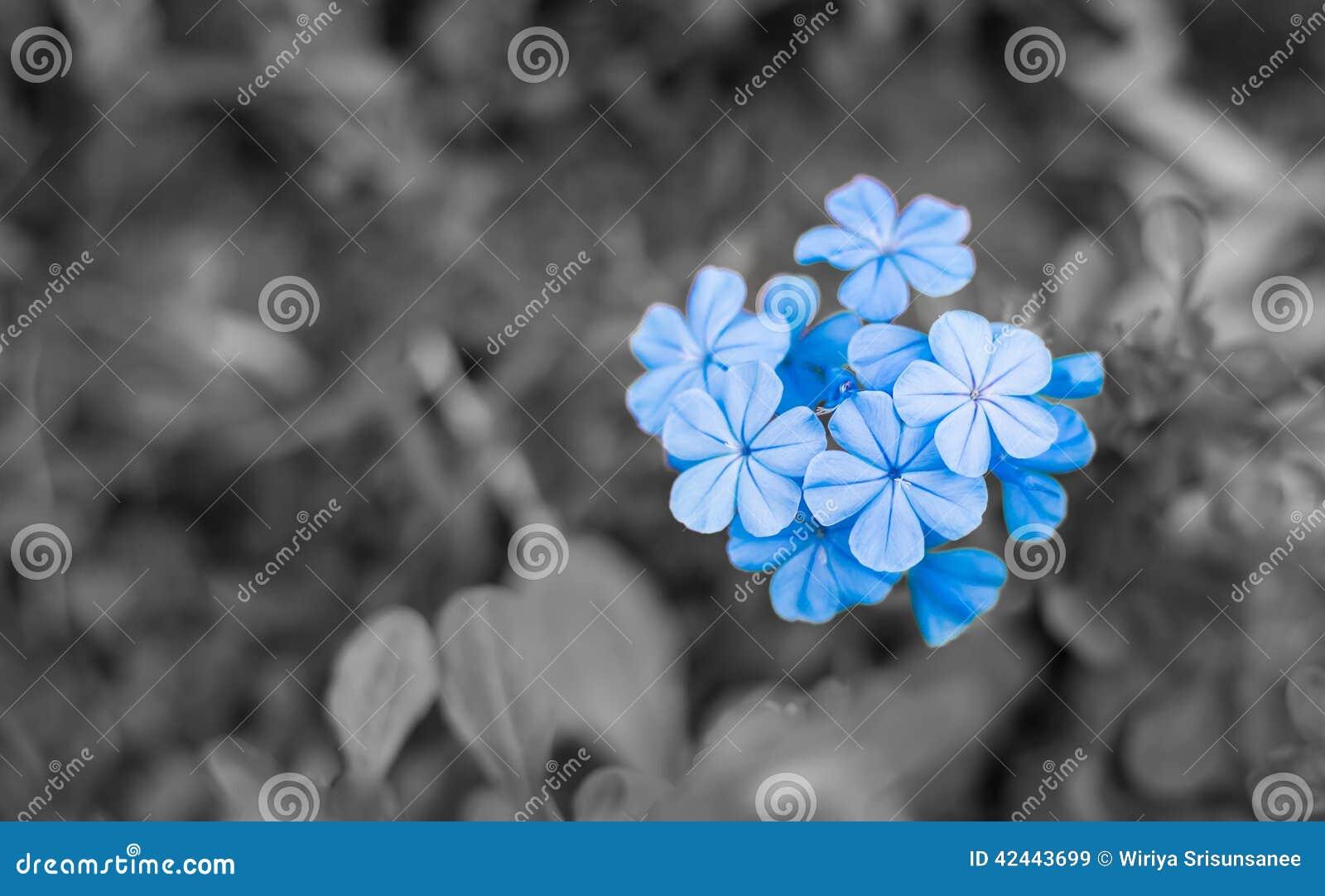 Azul - flores púrpuras