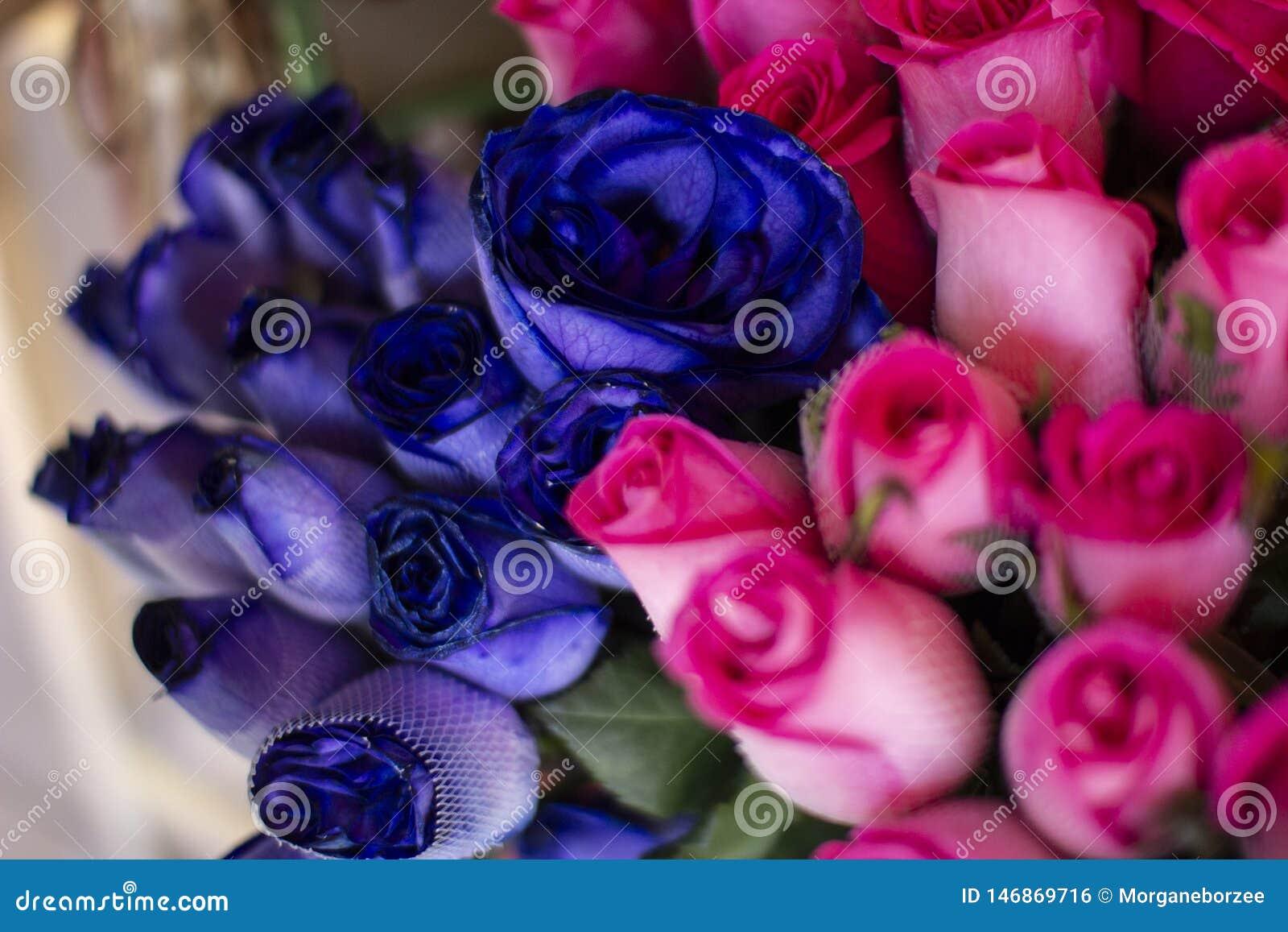 Azul fresco natural colorido e rosas cor-de-rosa na loja de florista