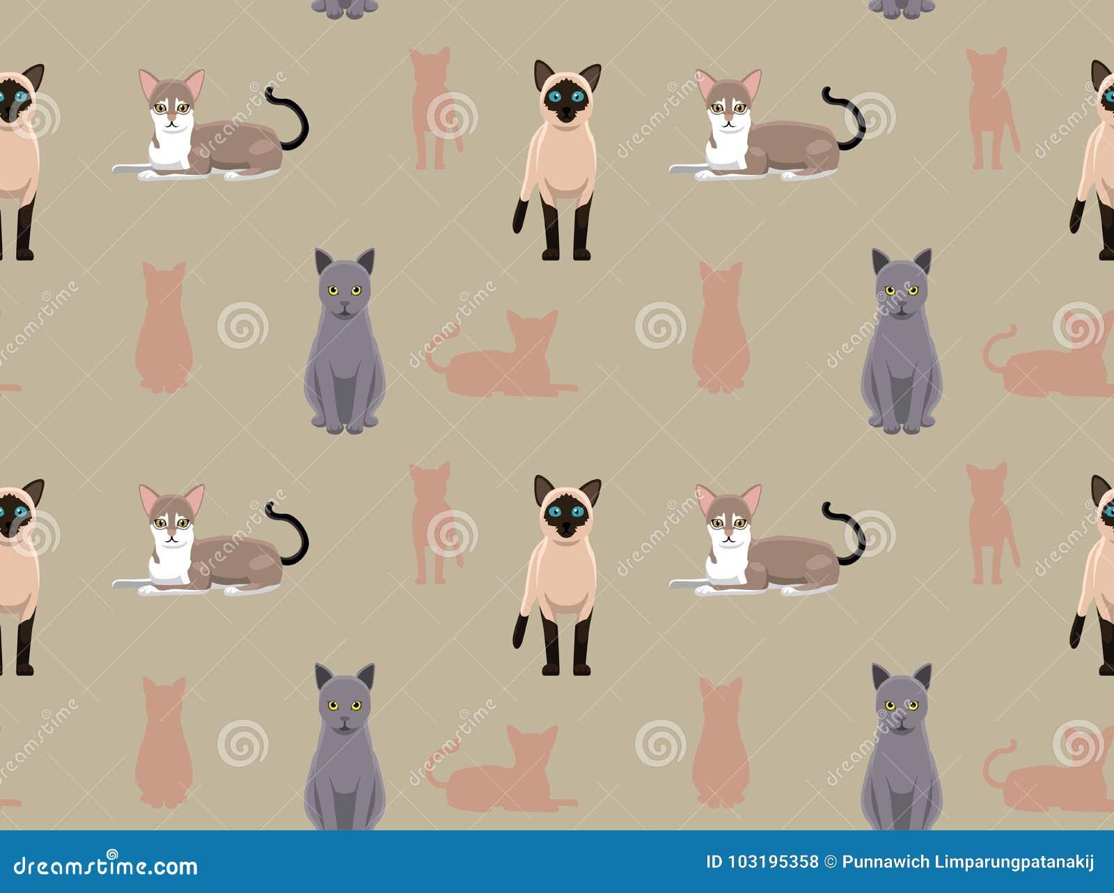 Azul Ruso Tonkinese Siamés Del Singapura De Cat Wallpaper