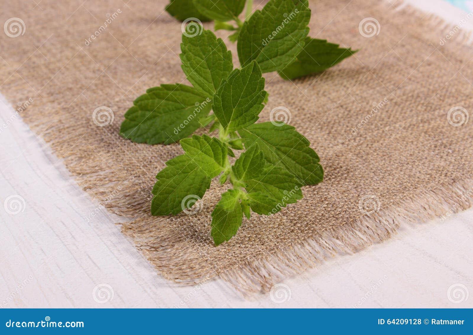 Bálsamo de limón sano fresco en la tabla de madera blanca, herbalism