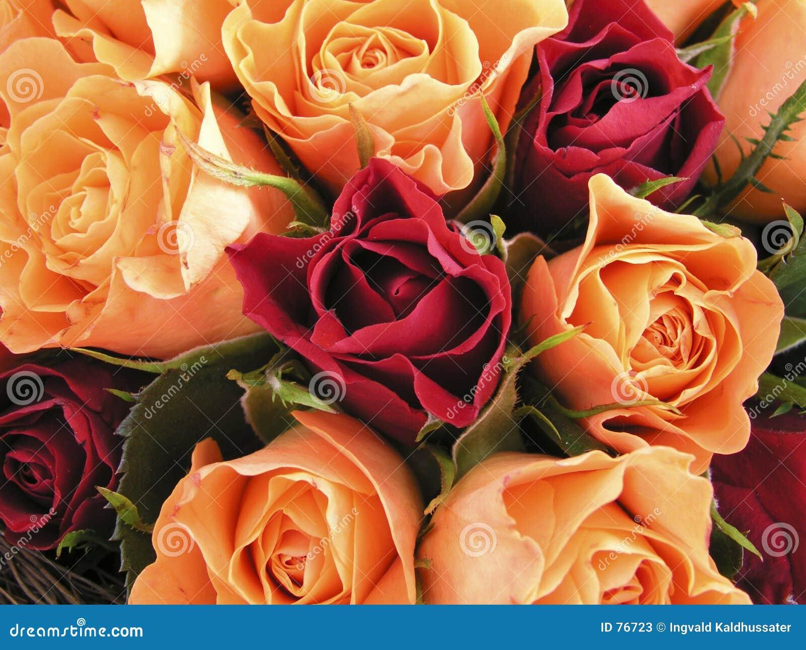 Bâti des roses II