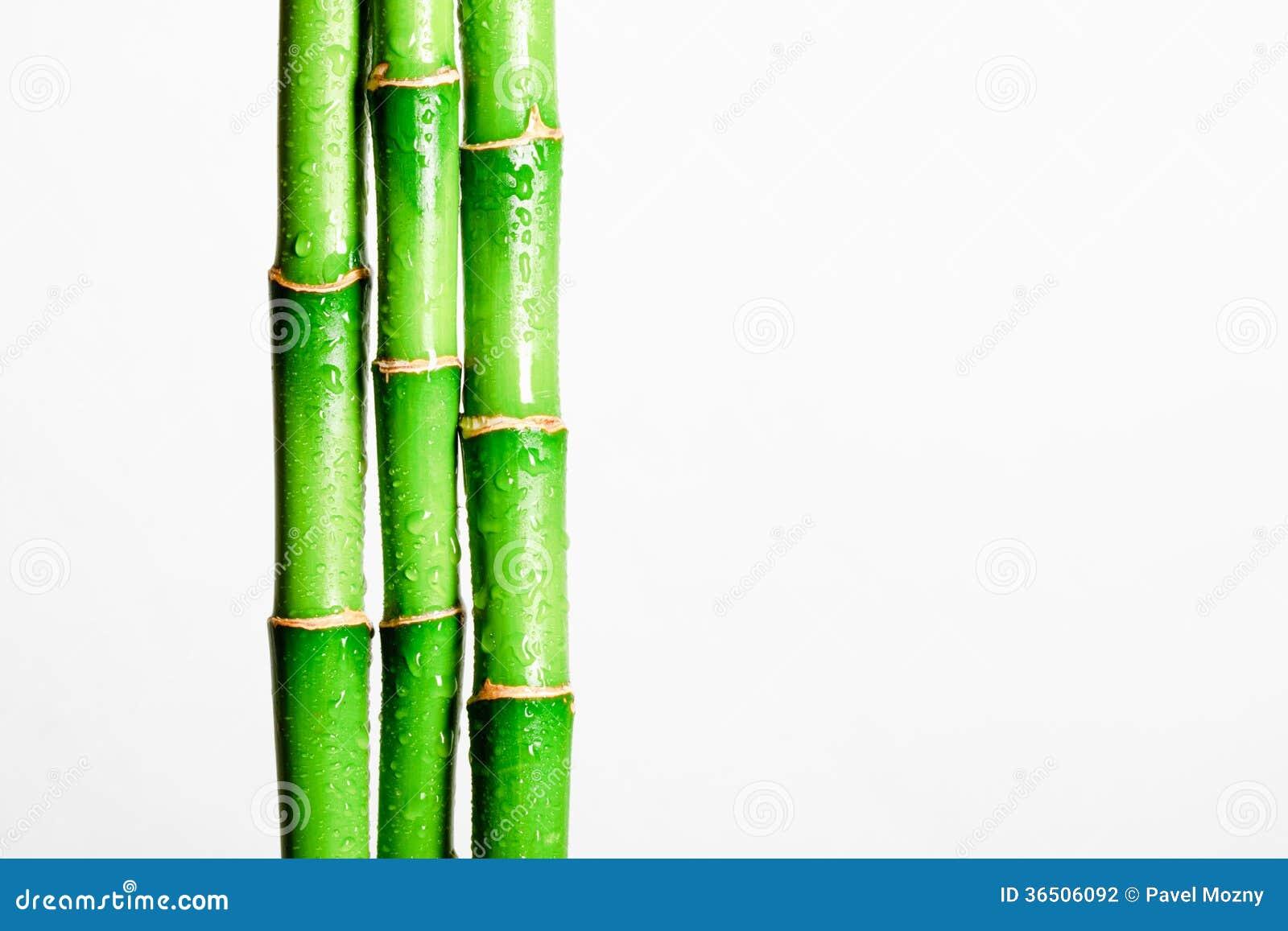 Bâton en bambou