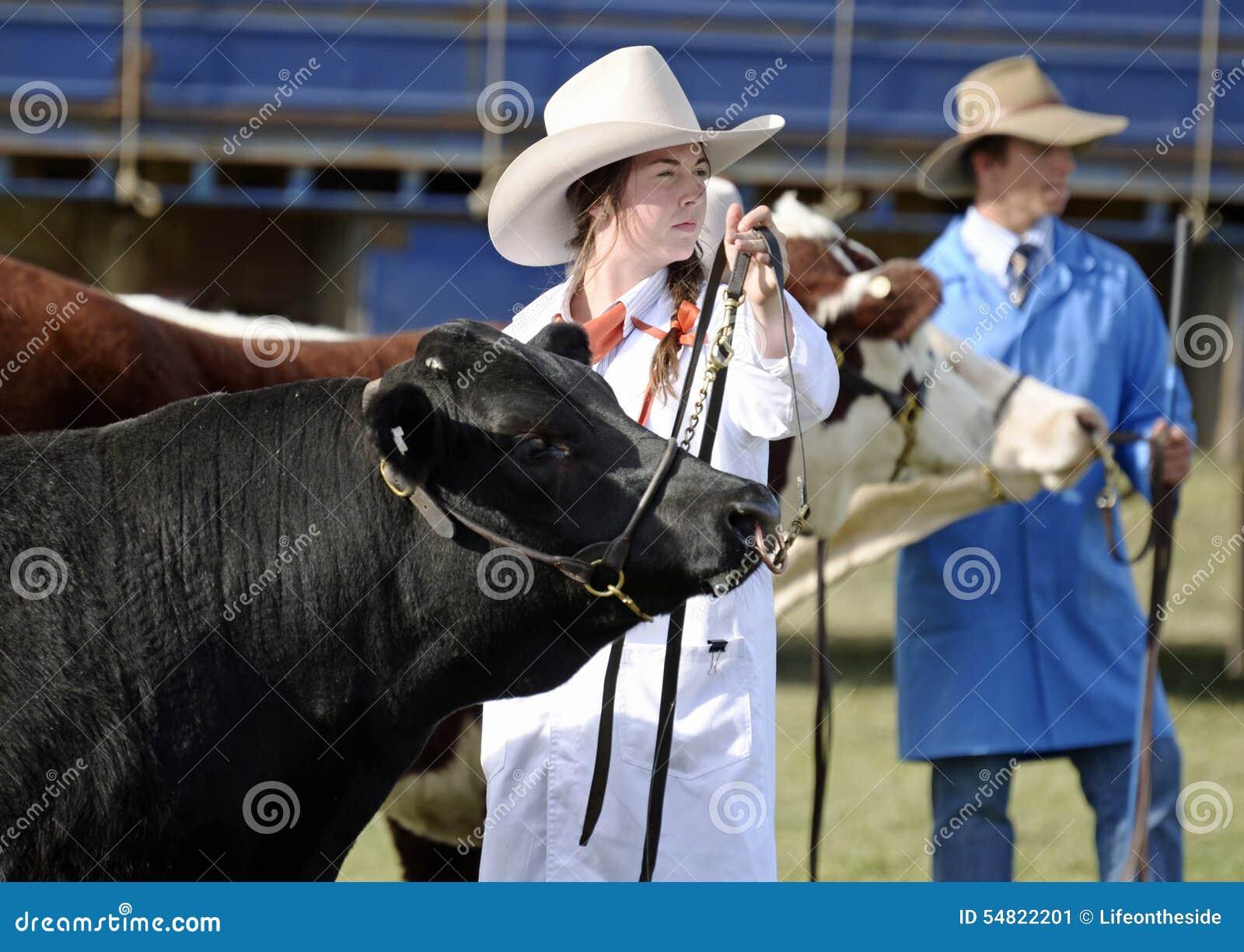 Bända Angus för australiska cowgirlutställningar tjur på den årliga landsshowmässan