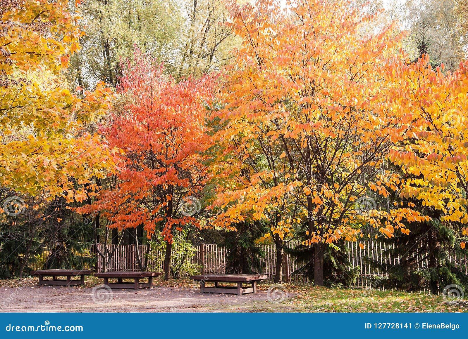 Bänke unter den Herbstbäumen in einem Park