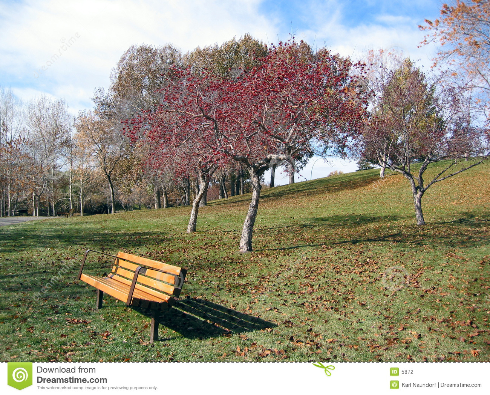 Bänken blad parkredtreen