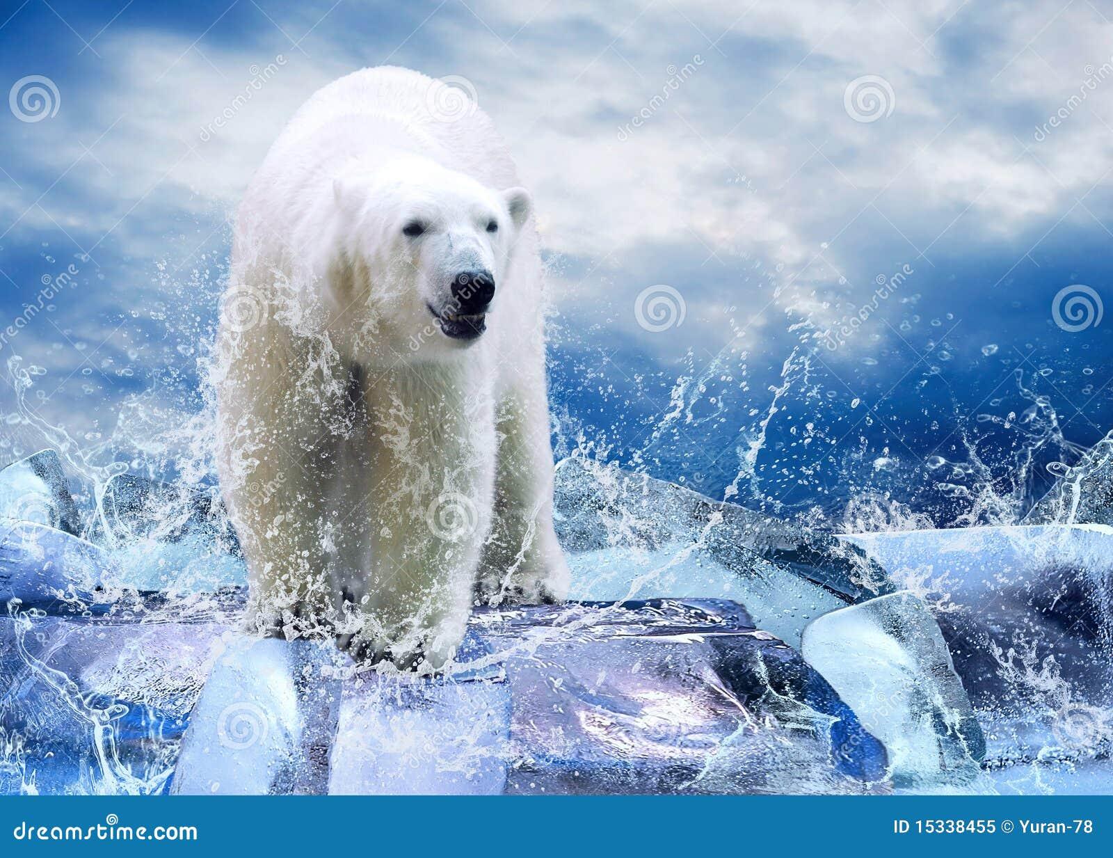 Bären-Jäger