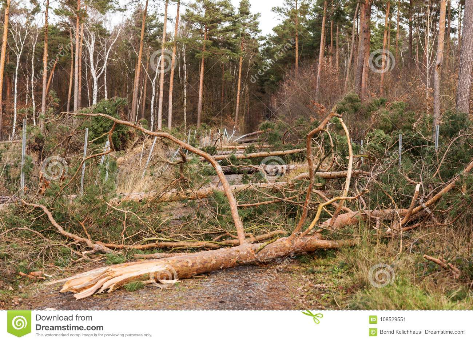 Bäume blockieren den Waldweg nach dem Sturm