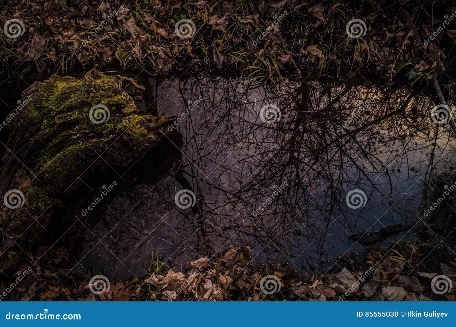 Bäume des Waldes und flüssiges Süßwasser zur Sonnenuntergangzeit Aserbaidschan Kaukasus