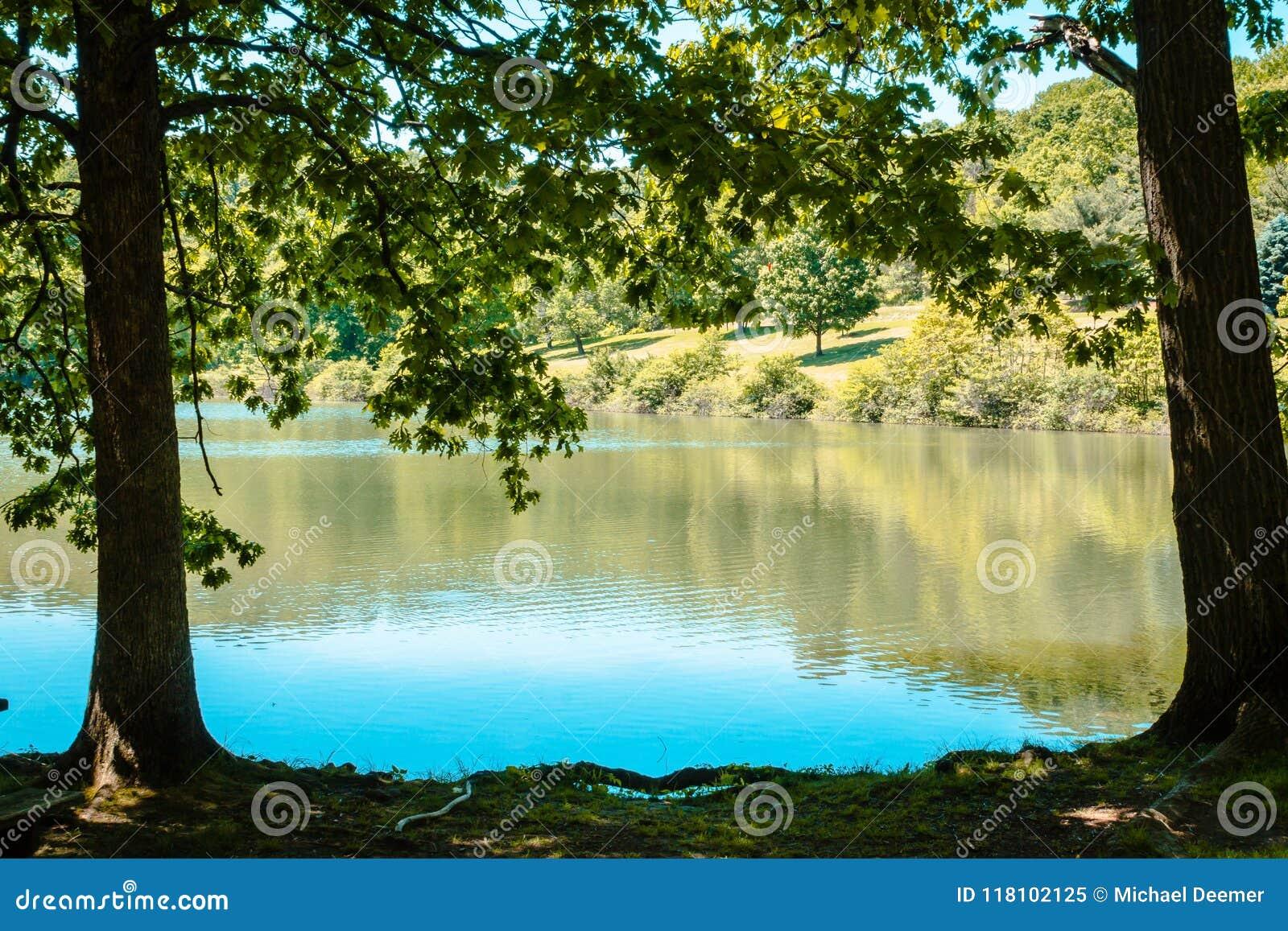 Bäume, die einen See an einem sonnigen Sommertag am Blautanne-Park gestalten