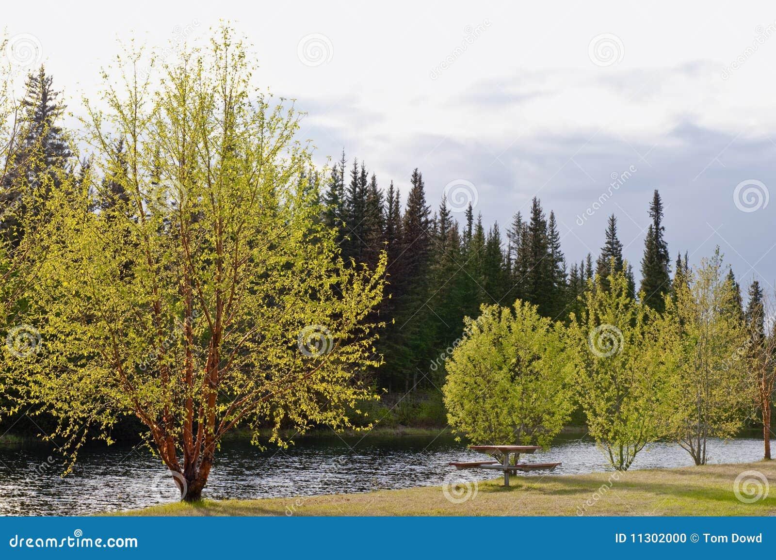 Bäume durch Flussquerneigung im Frühjahr
