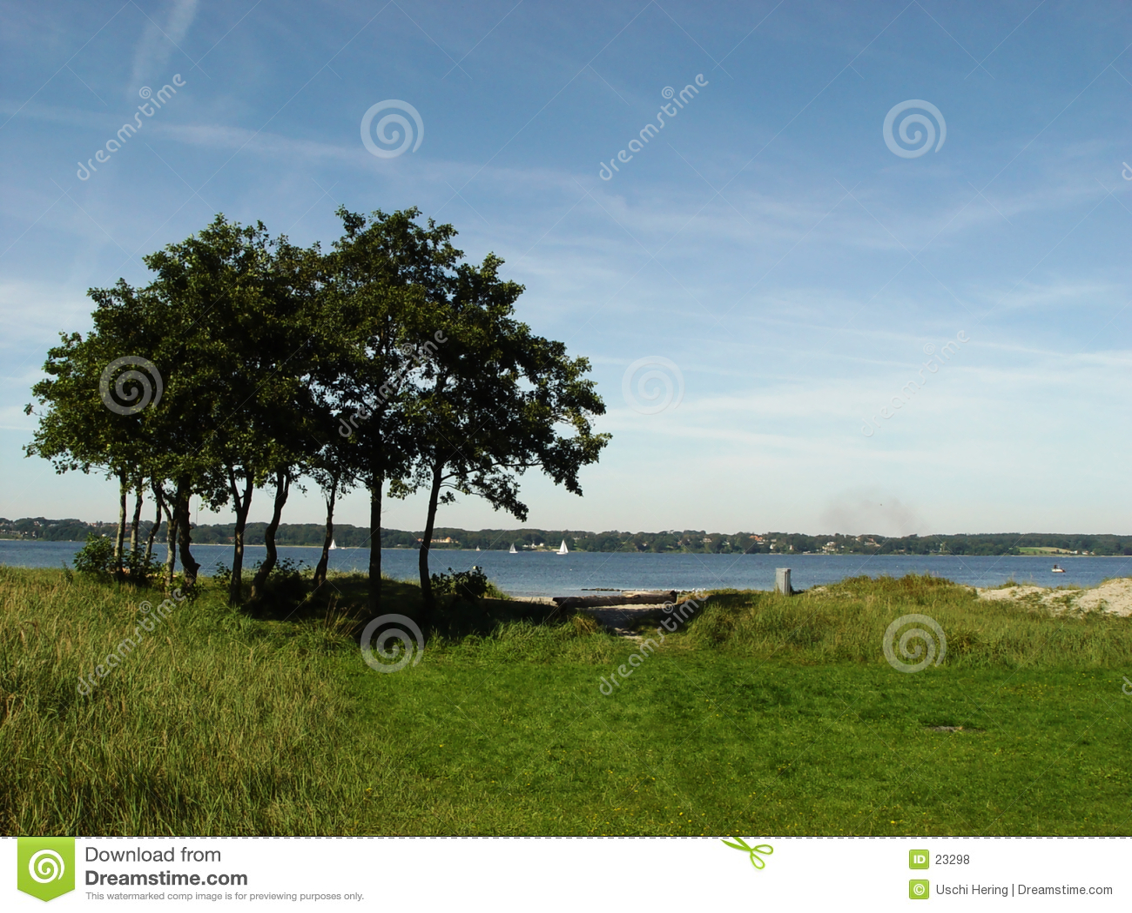 Bäume in Fjord