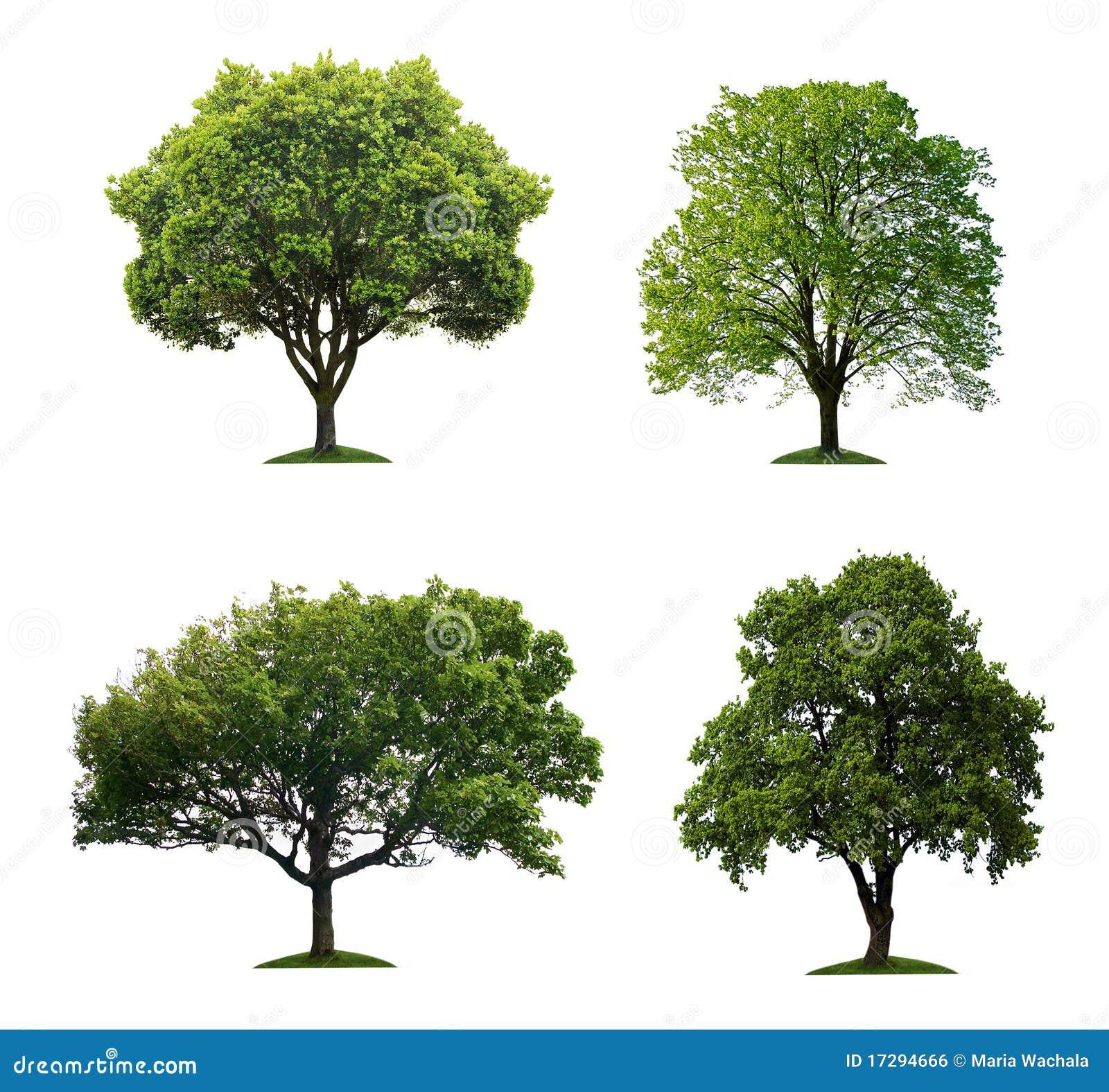 Bäume getrennt