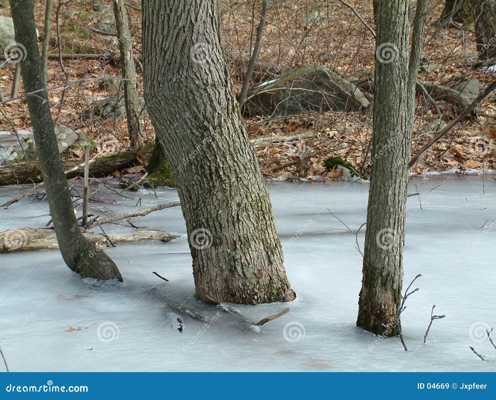 Bäume im Eis