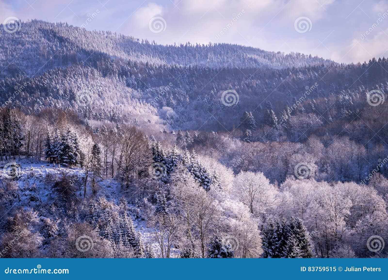 Bäume im Winter im Schwarzwald, Deutschland