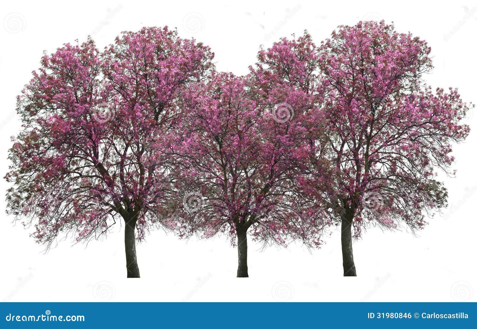 Bäume lokalisiert über Weiß
