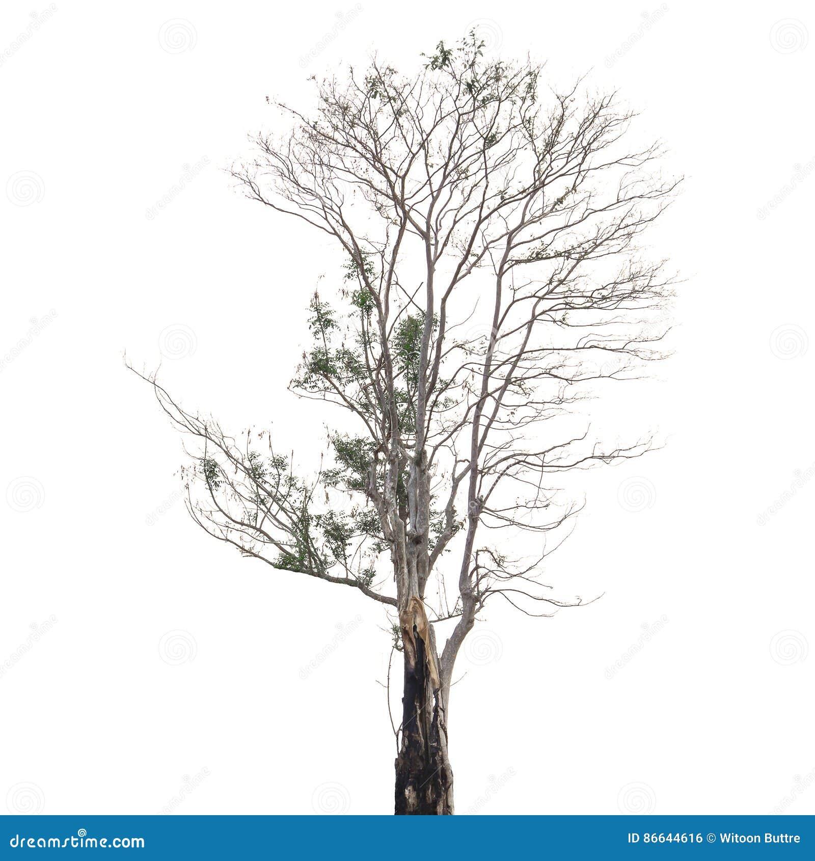 Bäume lokalisiert