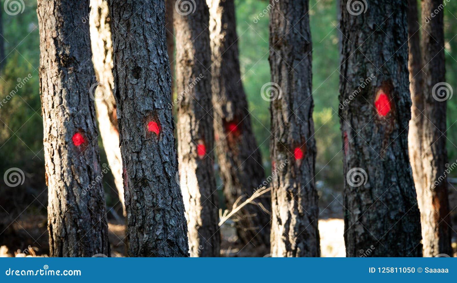 Bäume markiert für Schnitt mit roten Punkten