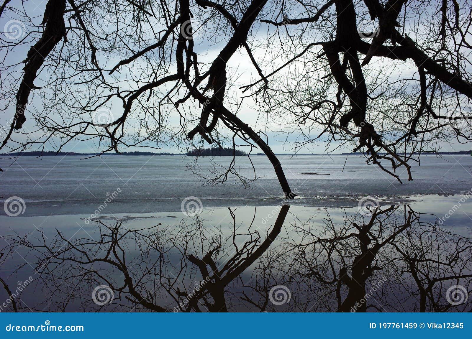 bäume ohne die blätter die sich völlig im