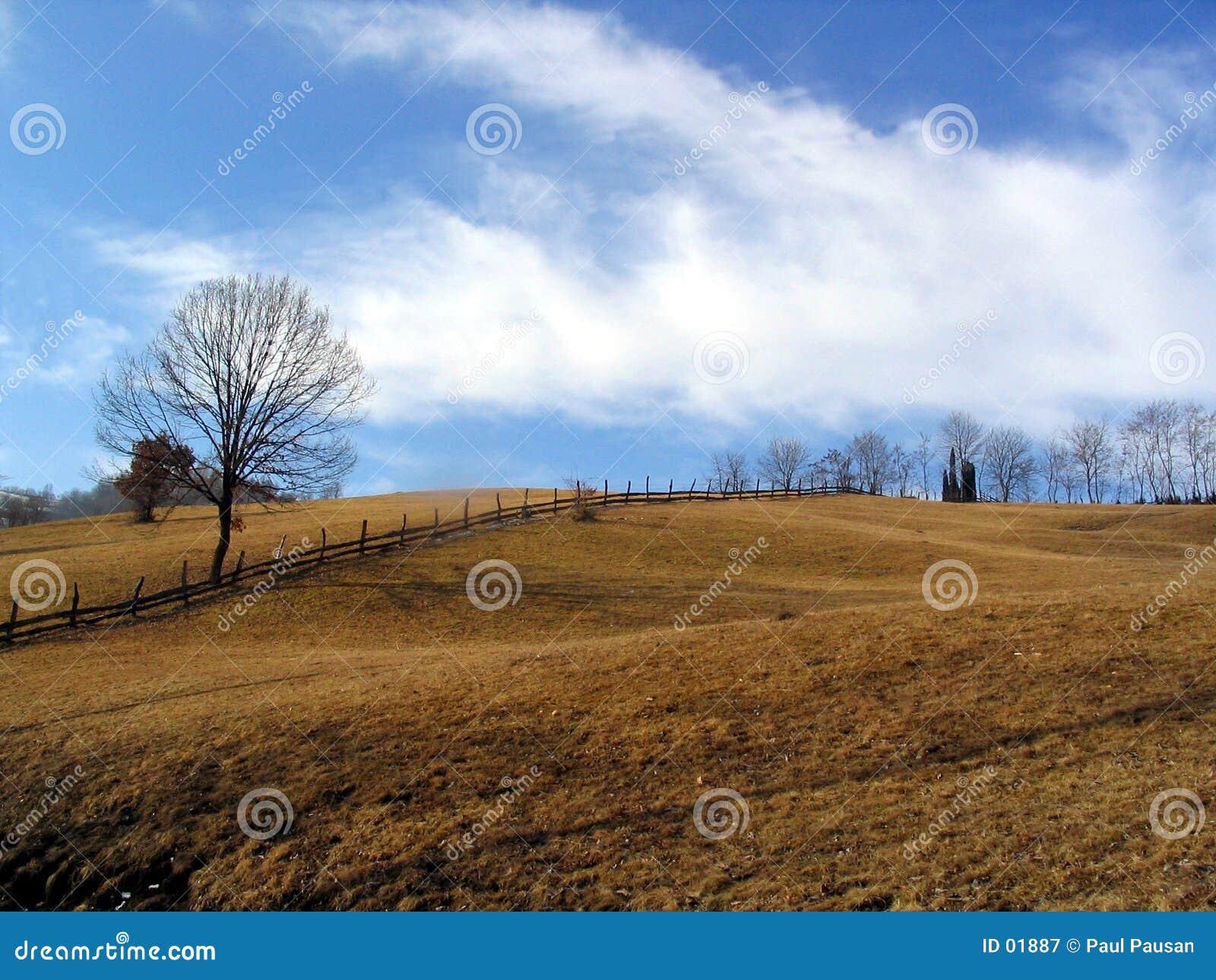 Bäume und Hügel