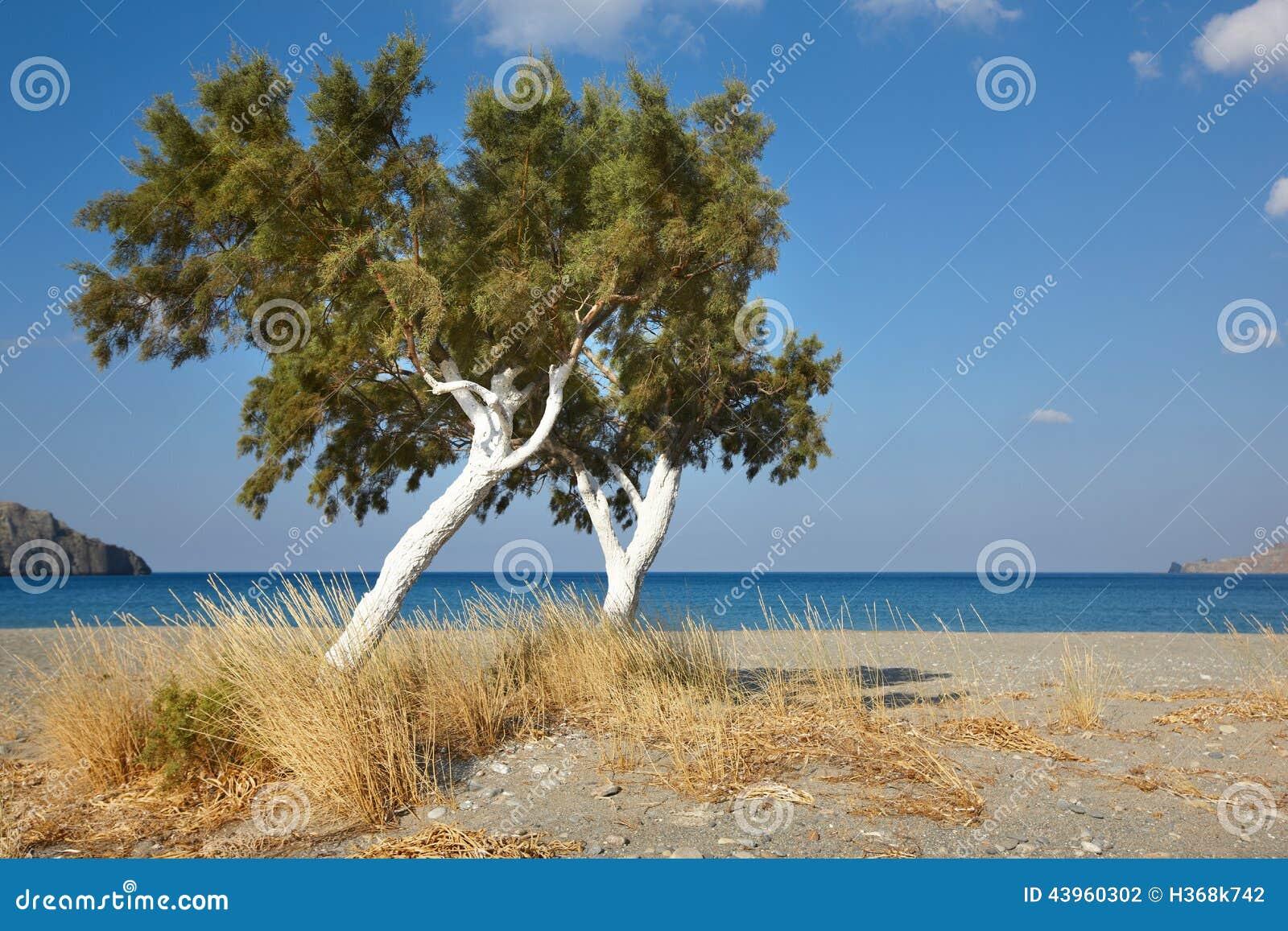 b ume und mittelmeer bei sonnenaufgang in plakias kreta griechenland stockfoto bild von