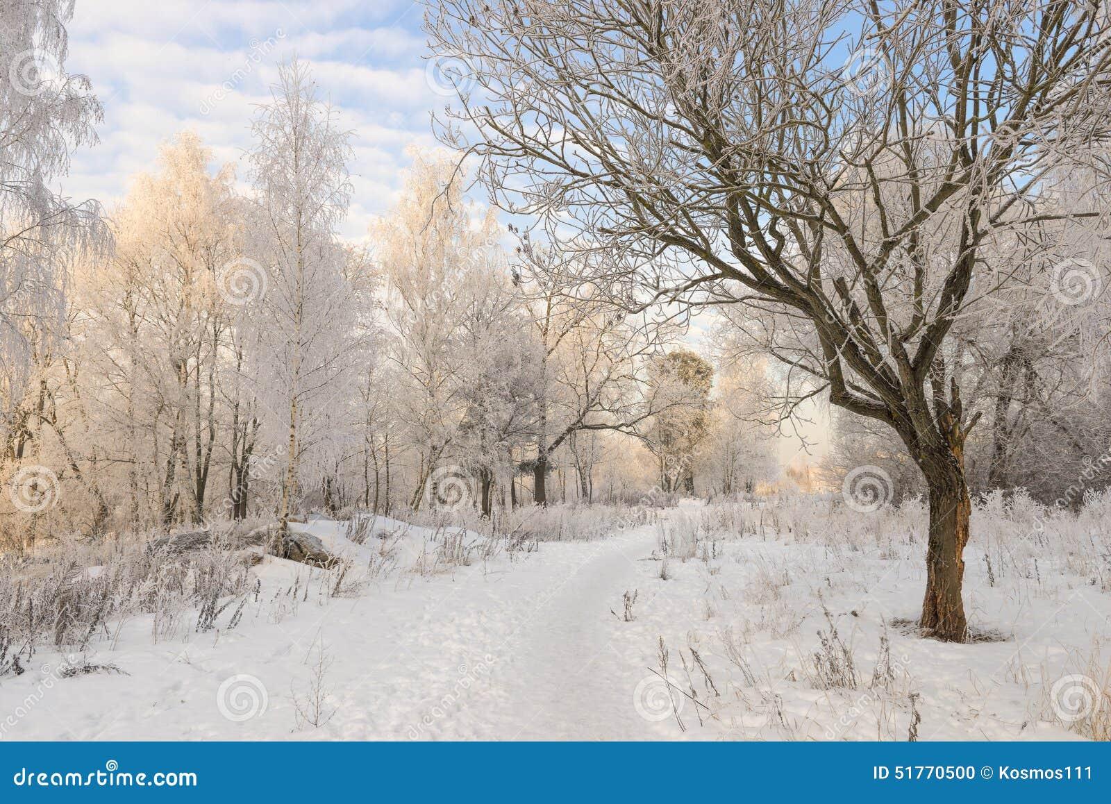 Bäume und Schnee, Schuss von oben