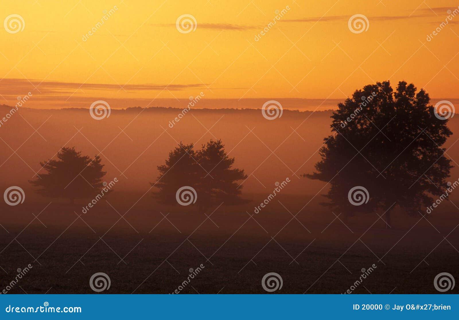 Bäume und Sonnenaufgang