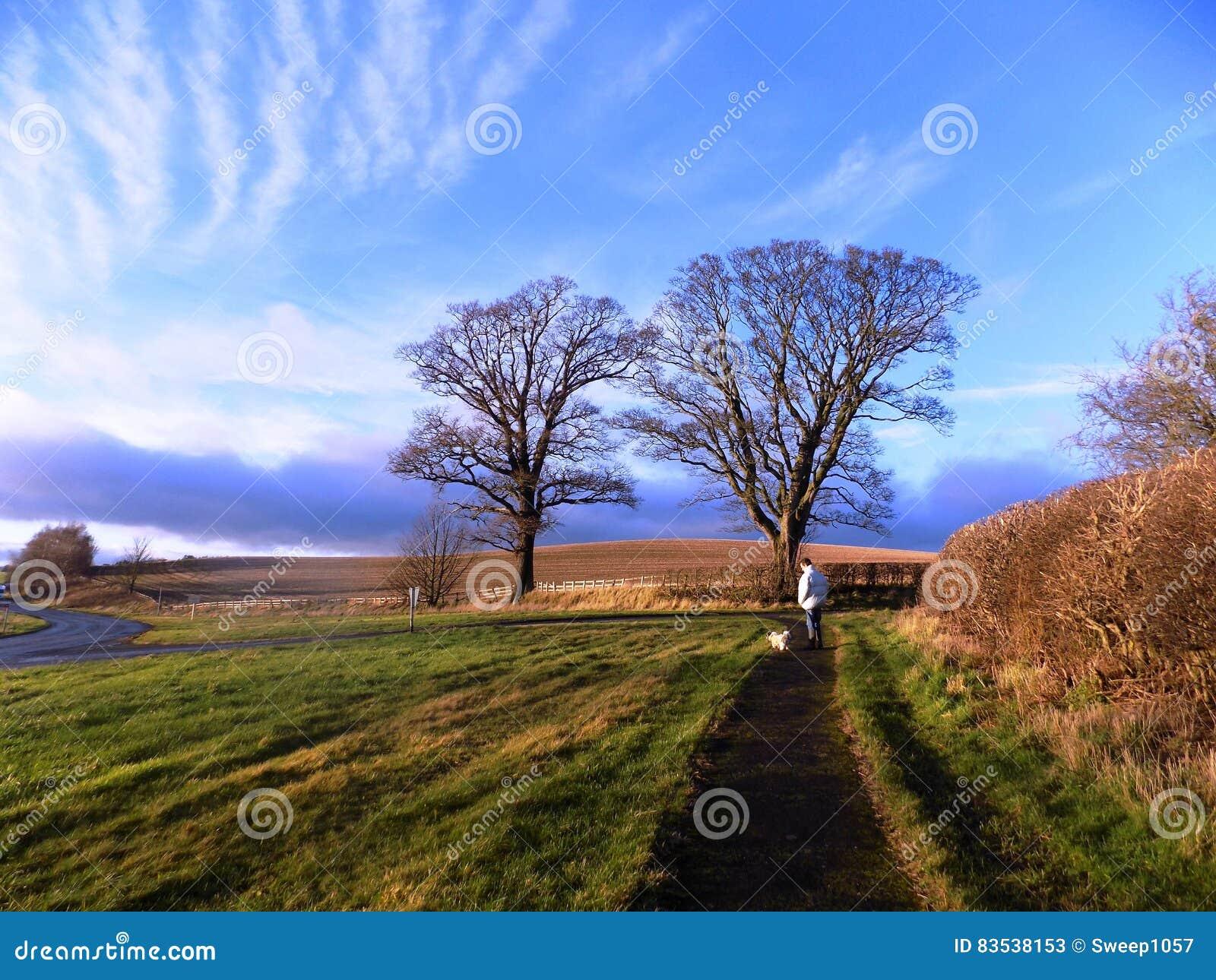 Bäume und Zaun, in Nord-Northumberland, England Großbritannien