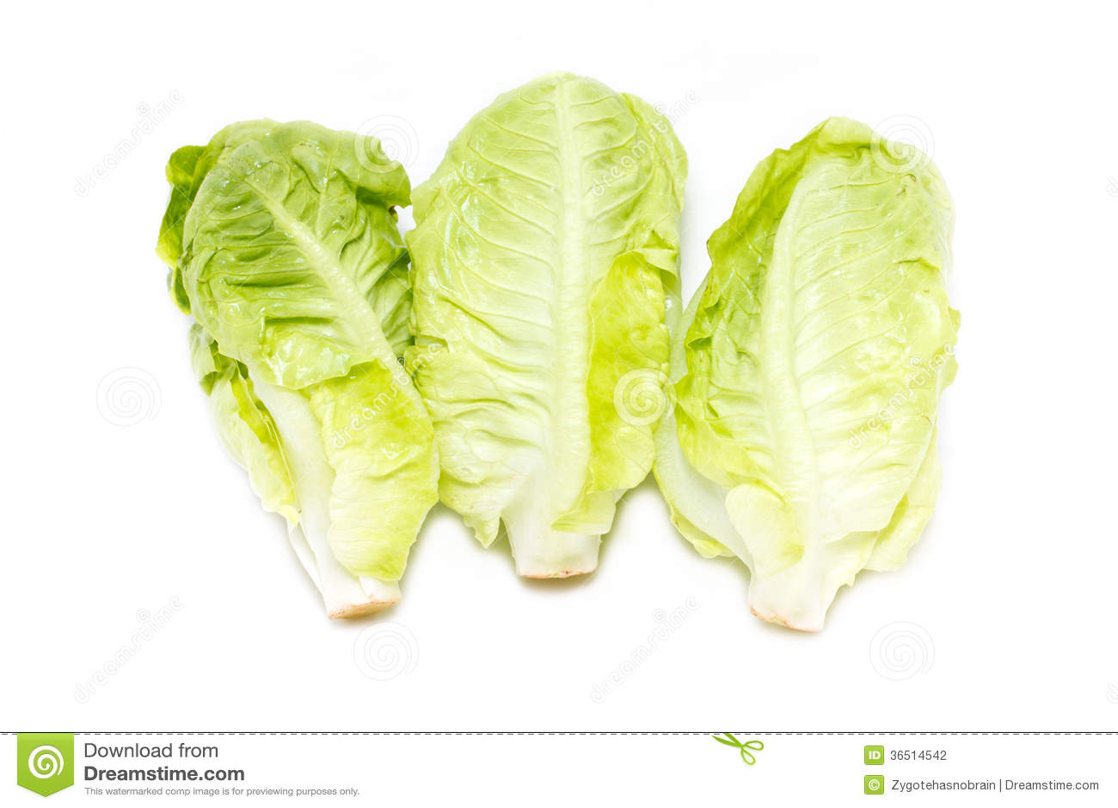 Bébé Cos Lettuce.