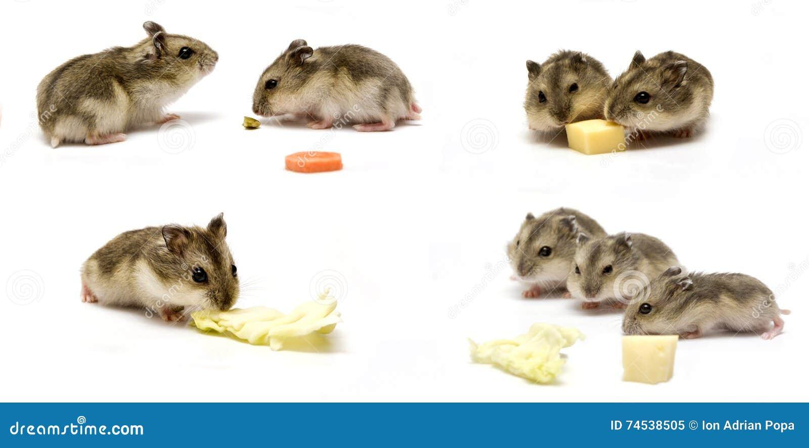 Bébés de hamster
