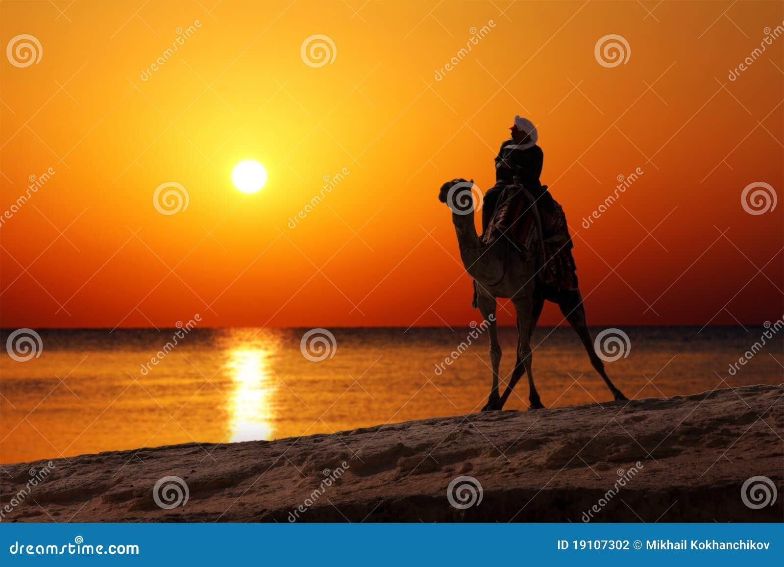 Bédouin sur la silhouette de chameau contre le lever de soleil