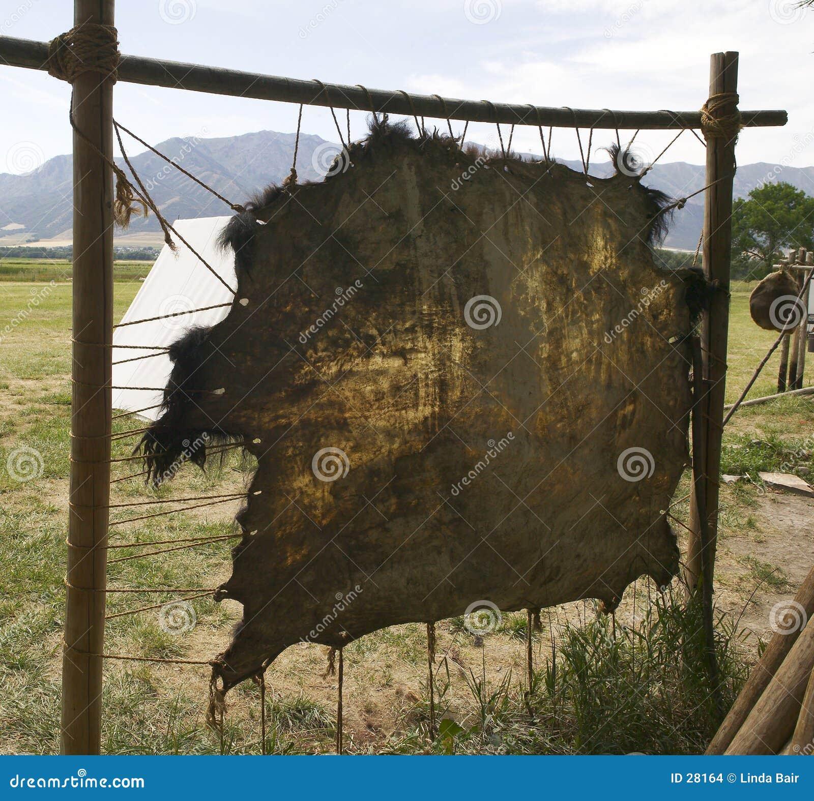 Download Büffel-Fell stockfoto. Bild von reise, kurieren, erbe, geschichte - 28164