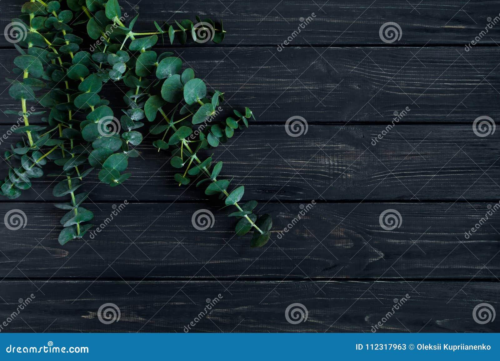Bündel Eukalyptusniederlassungen auf schwarzem Hintergrund Minimalistic Frühlingszusammensetzung der Natur, Draufsicht, flache La