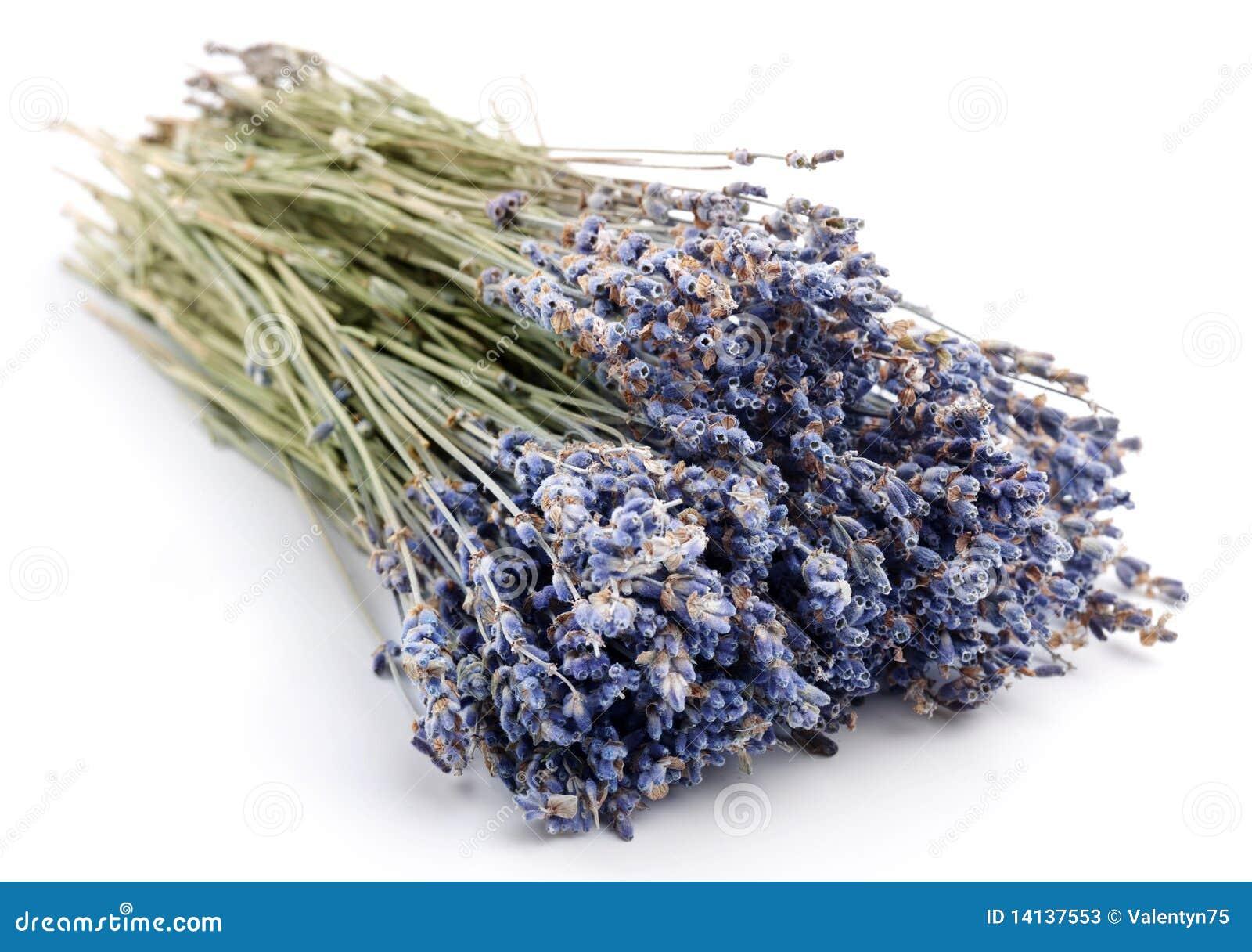 b ndel getrockneter lavendel stockfotos bild 14137553