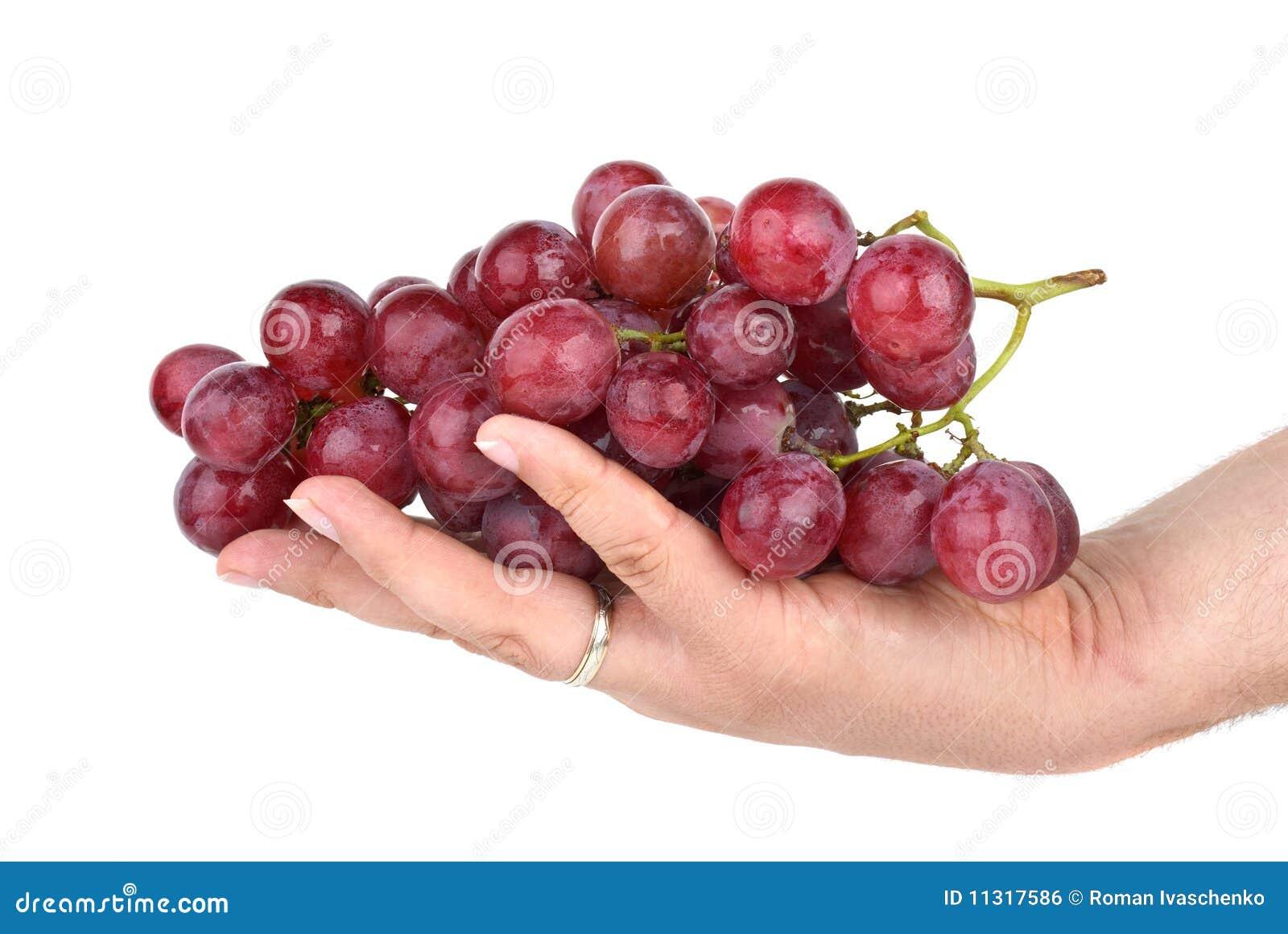 Bündel rosafarbene Trauben in der Palme
