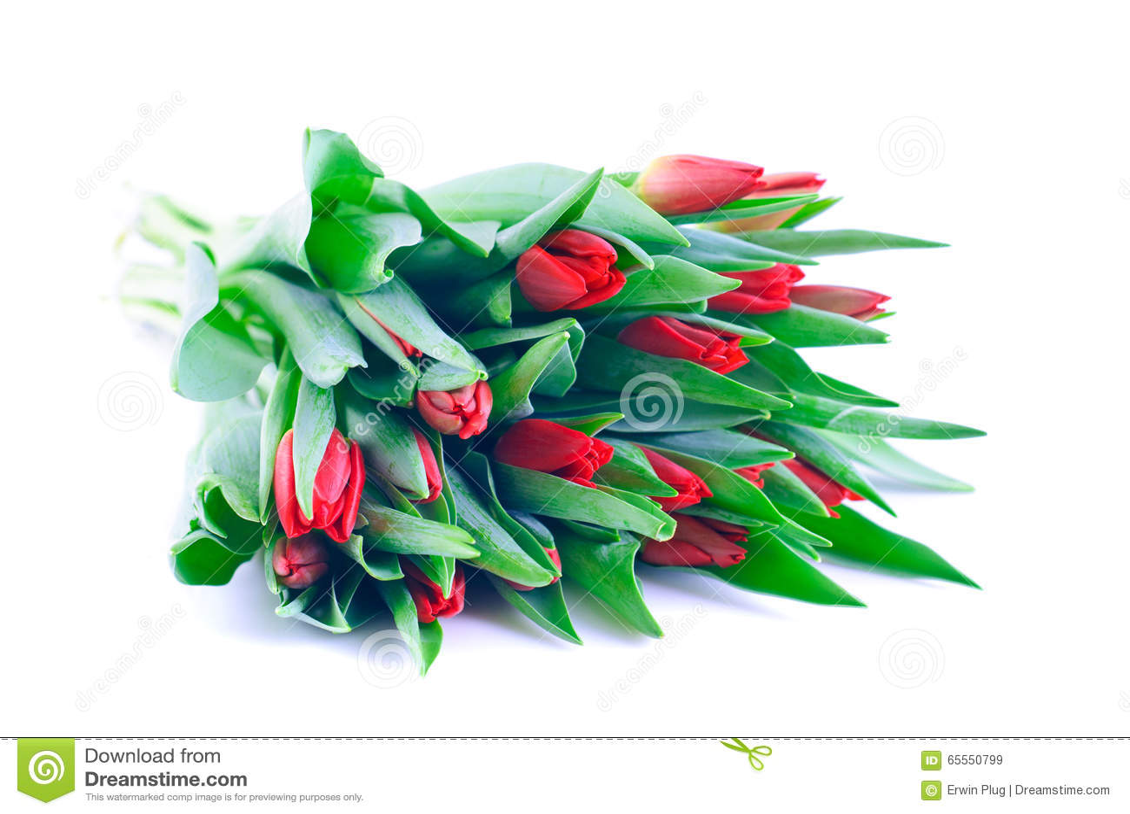 Bündel rote Tulpen