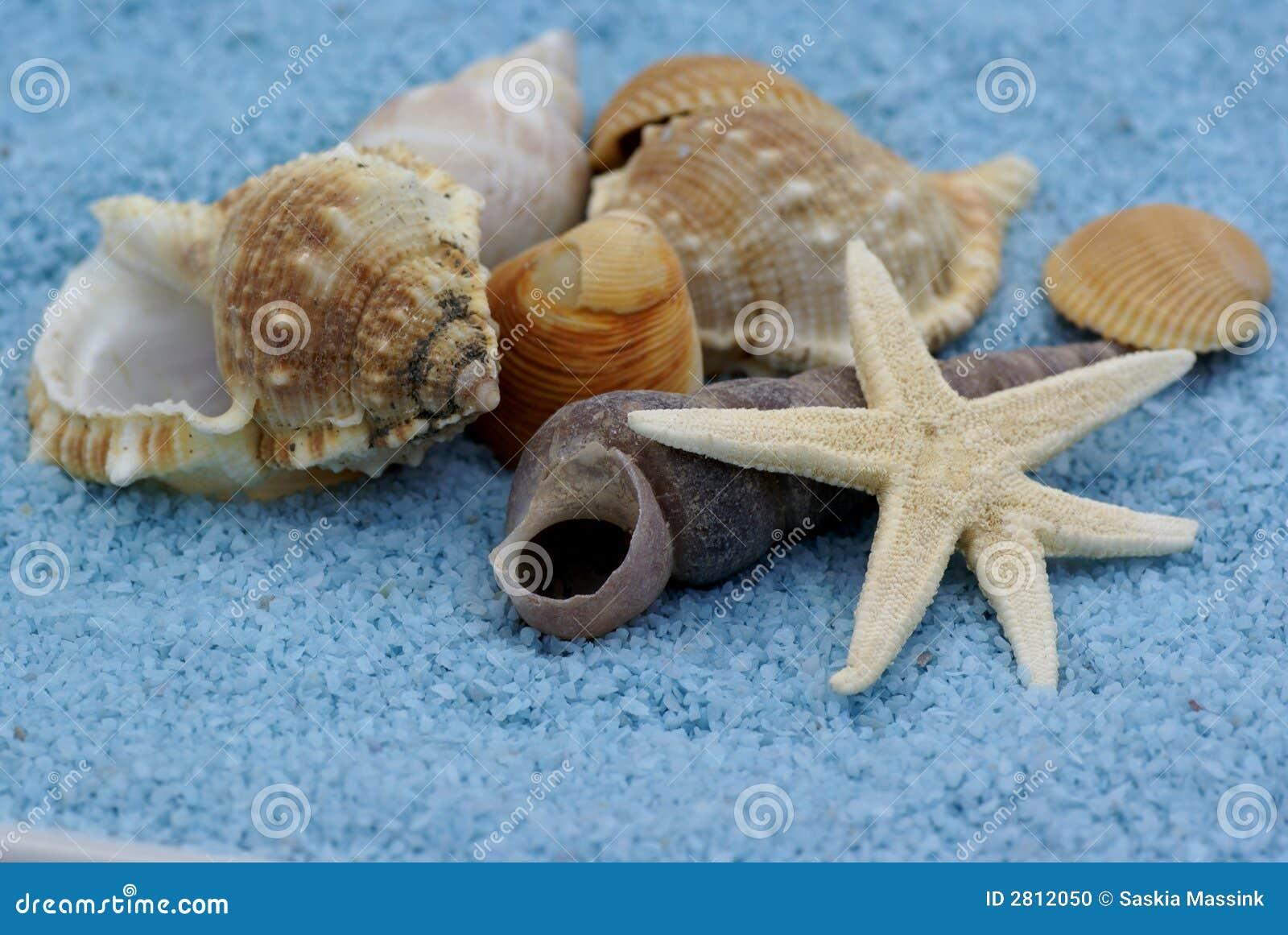 Bündel Shells.