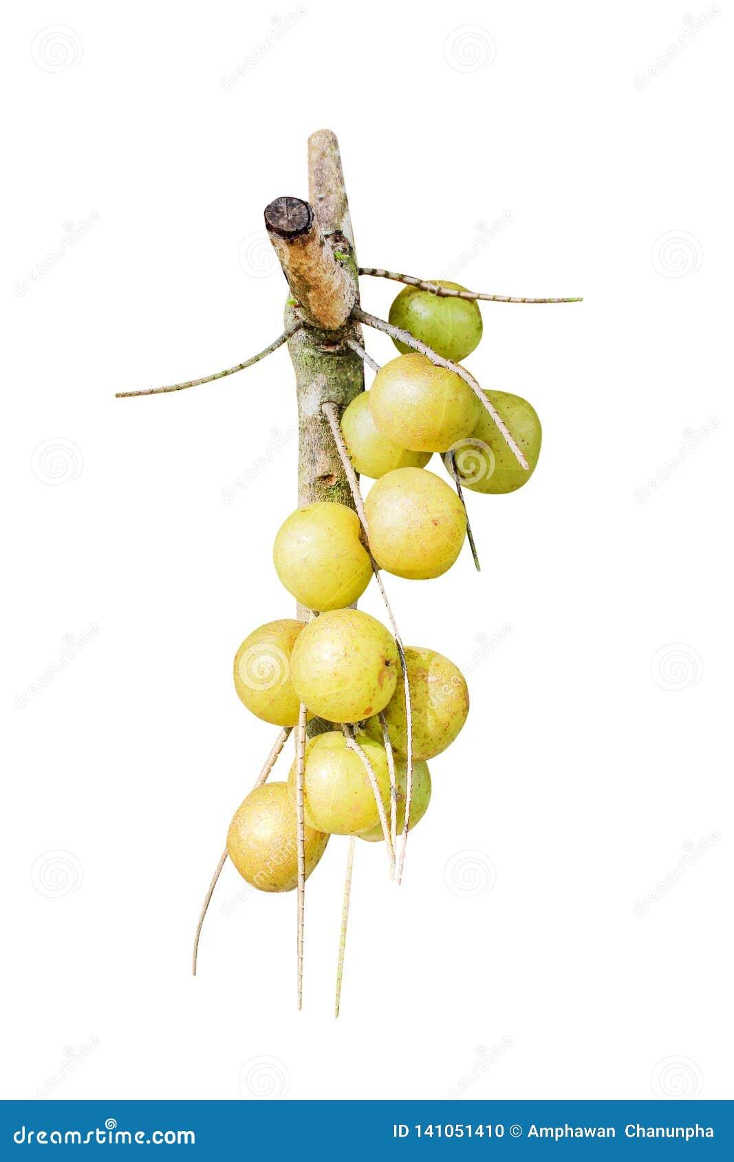 Bündelbeschaffenheit der indischen Stachelbeere oder phyllanthus emblica der organischen Frucht lokalisiert auf weißem Hintergrun