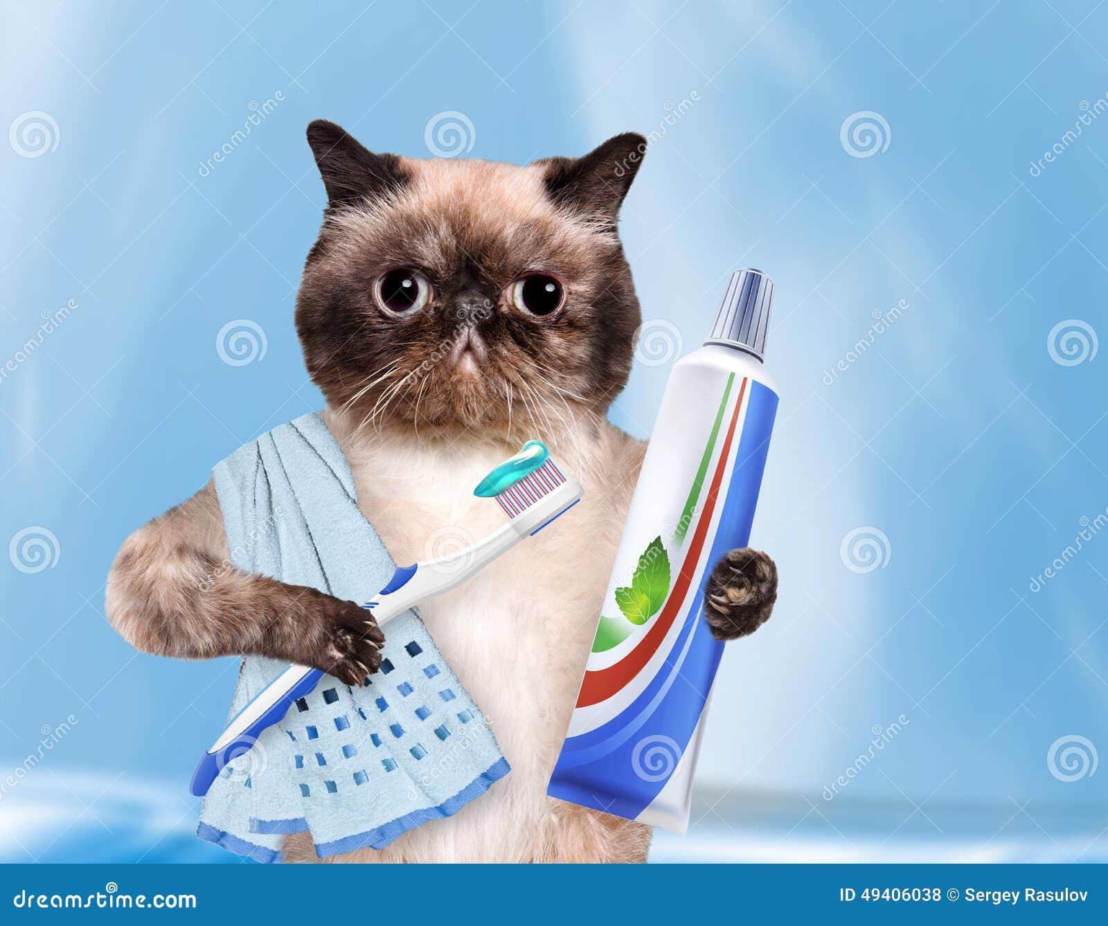 Download Bürstende Zahnkatze stockfoto. Bild von witz, lustig - 49406038