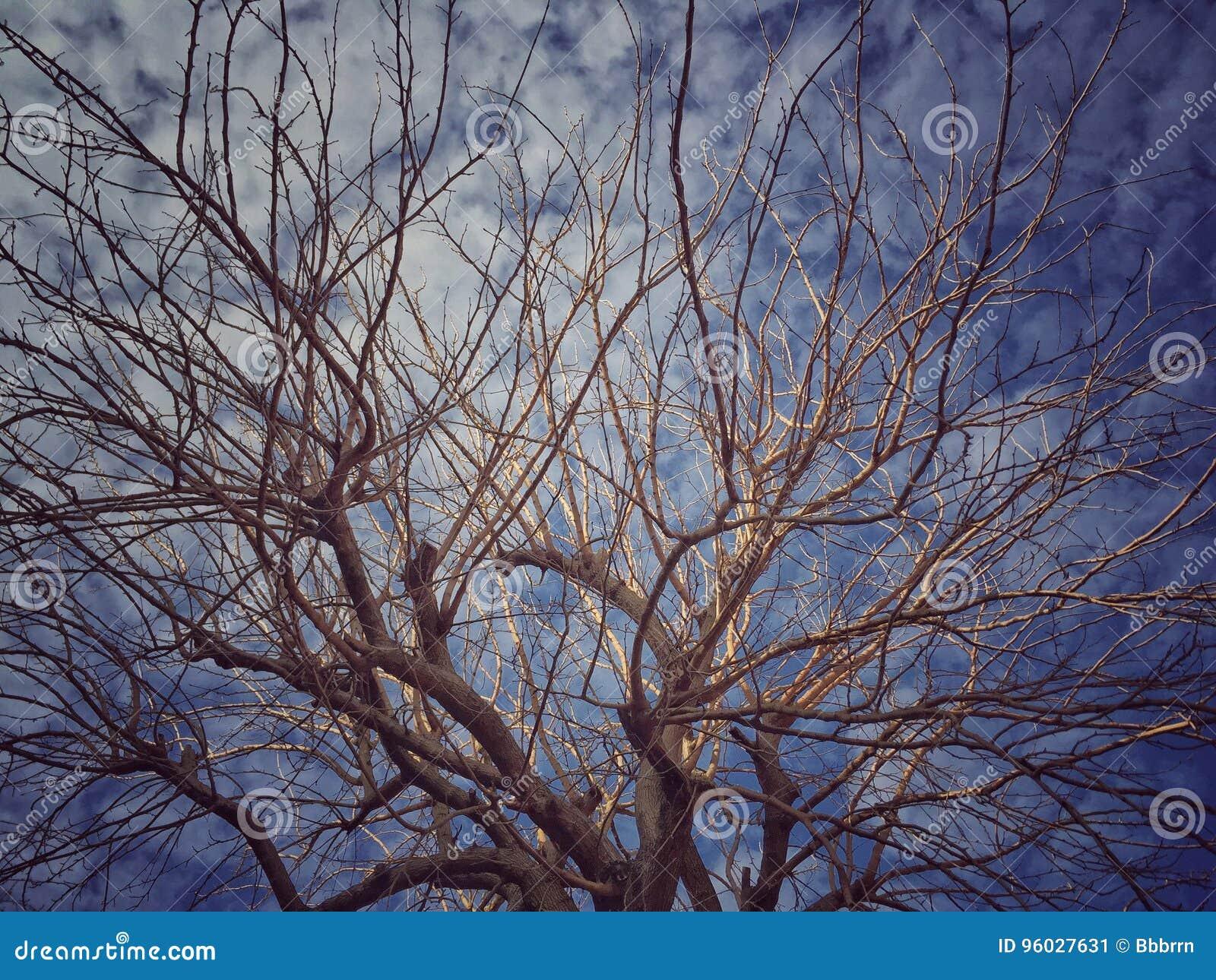 Błękit nieba oddziały przeciw drzewo