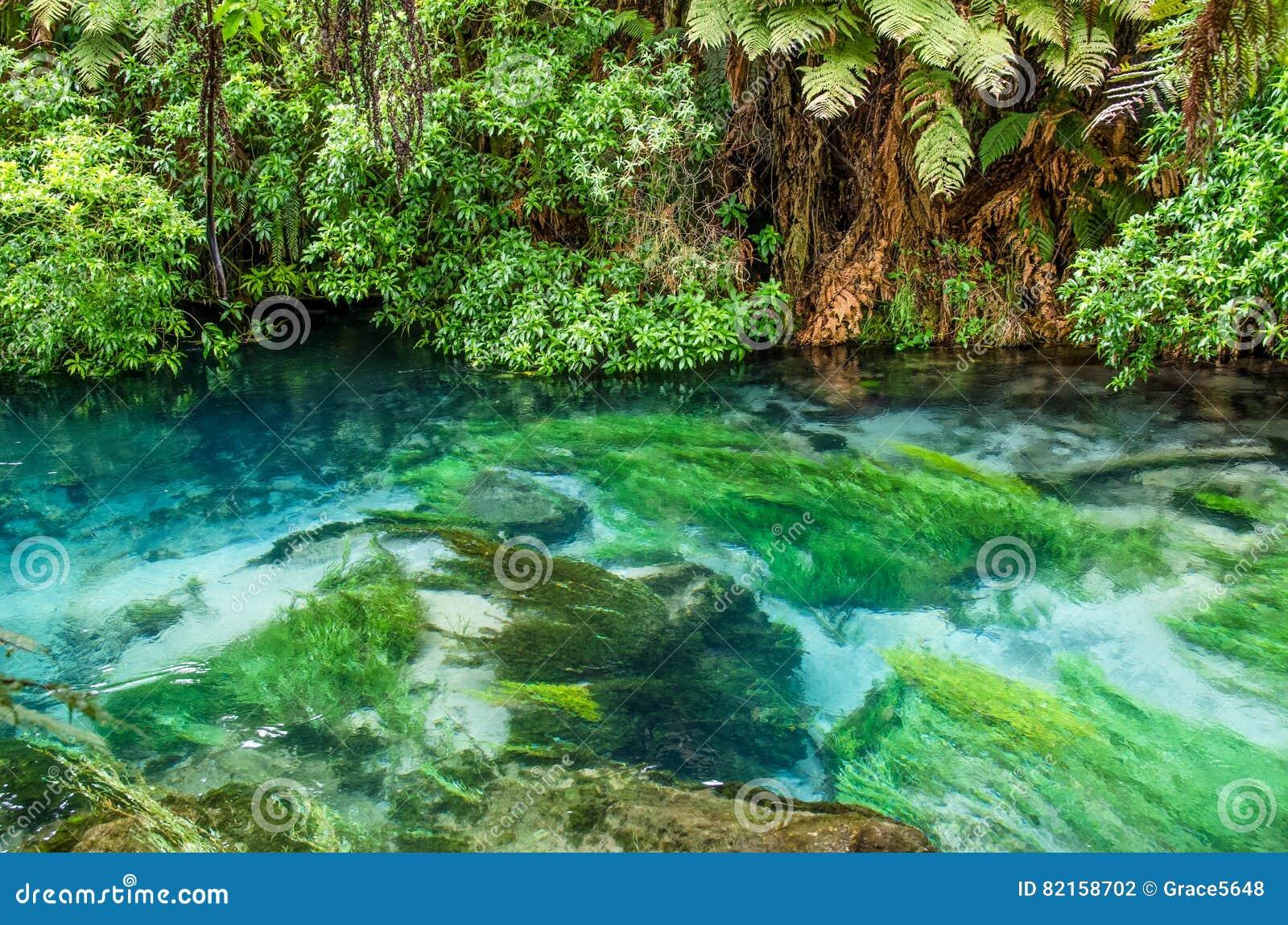 Błękitna wiosna Hamilton Nowa Zelandia która lokalizuje przy Te Waihou przejściem,