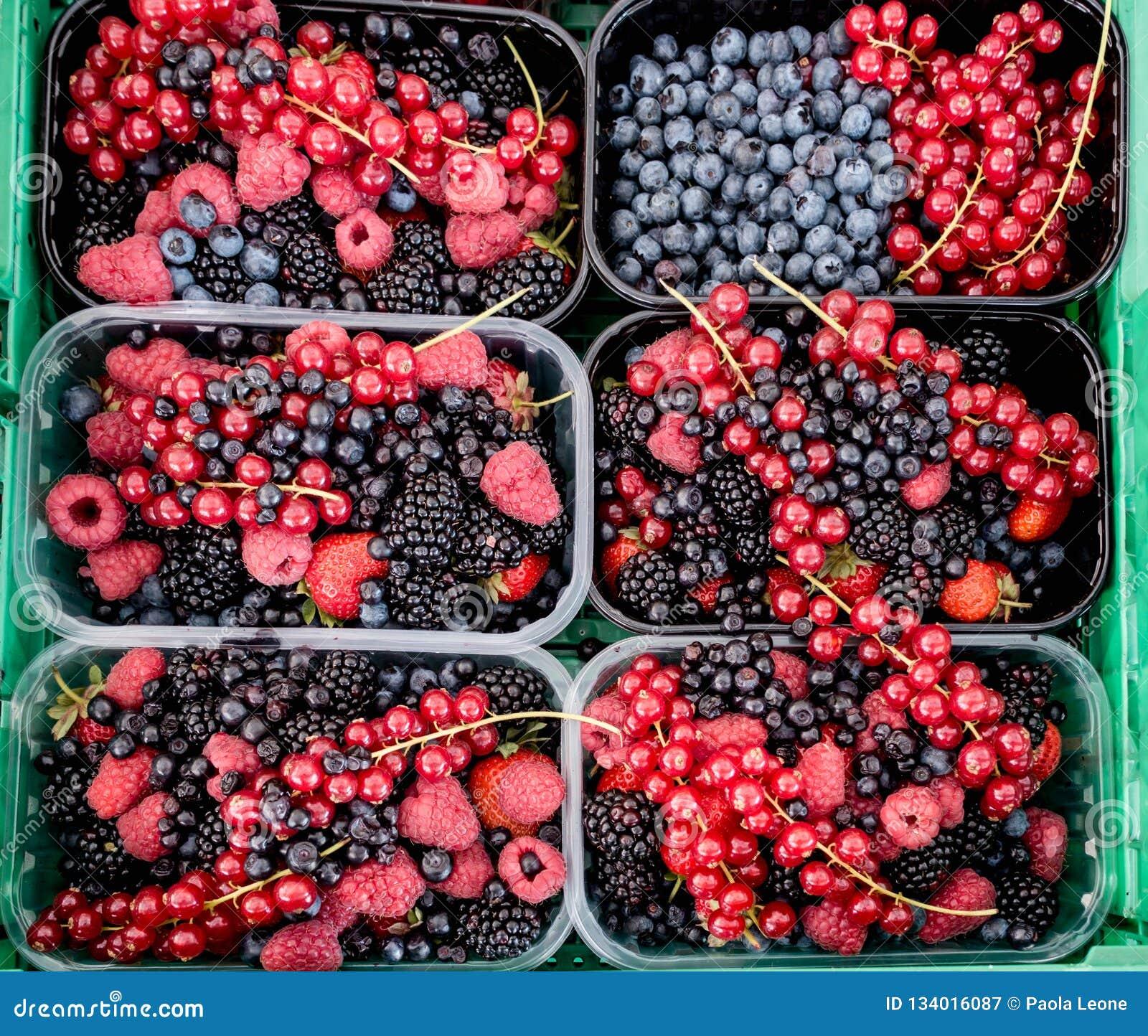 Błękitne i Czerwone czernicy, czarne jagody, malinki na tle dla sprzedaży,