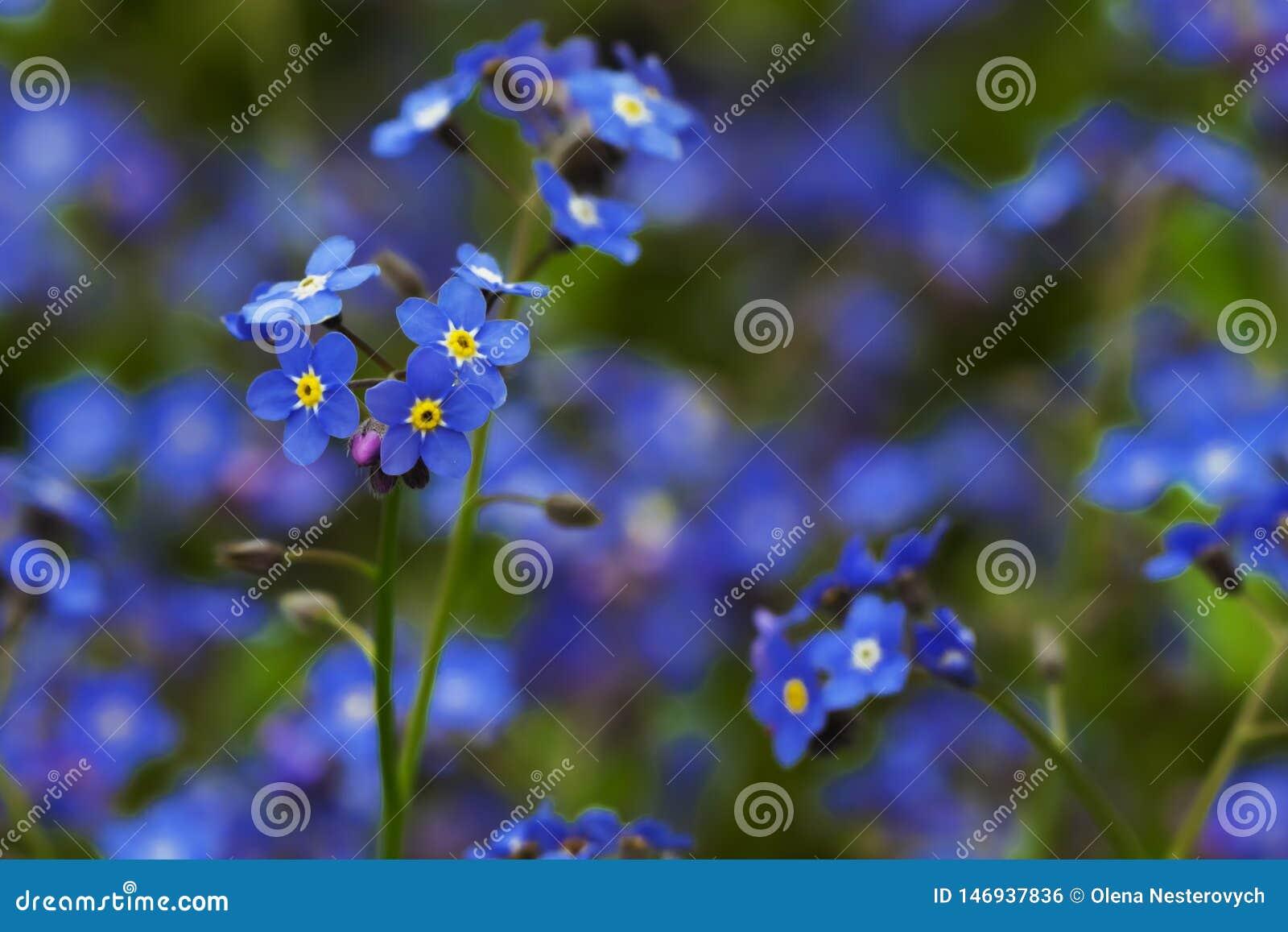 Błękitni powabni mali kwiaty