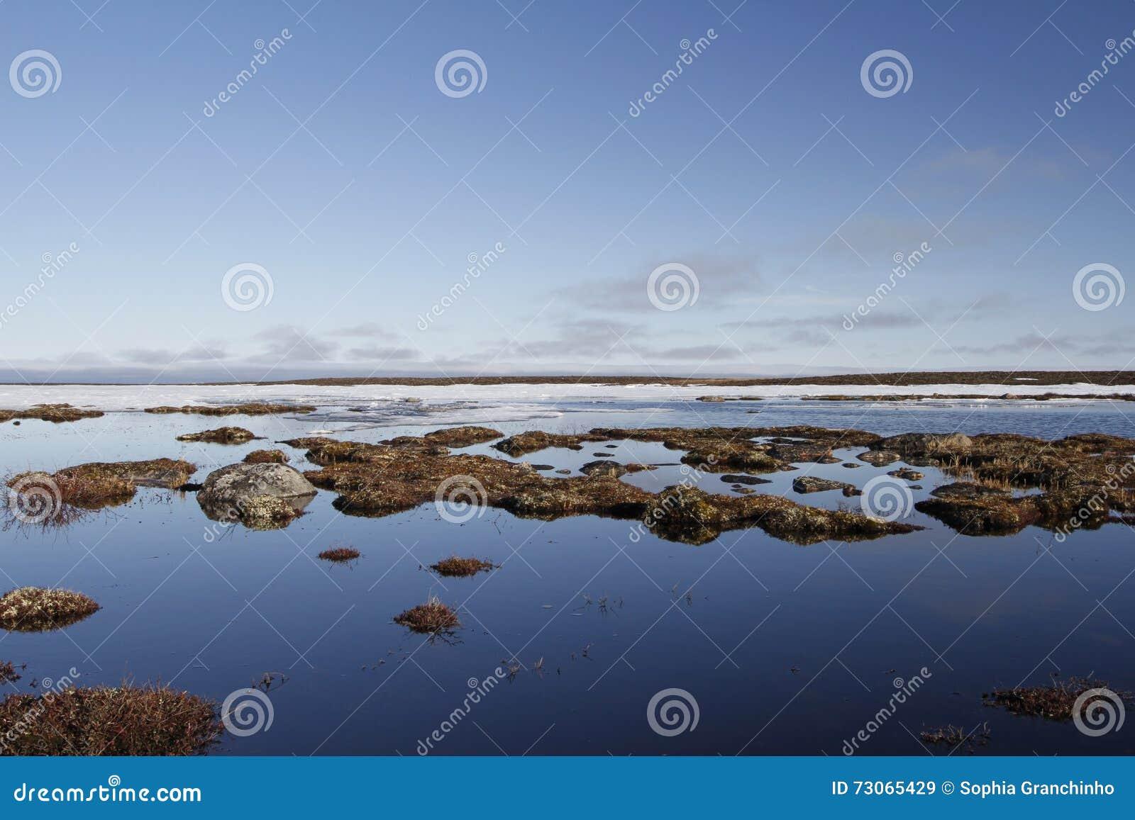 Błękitny arktyczny krajobraz