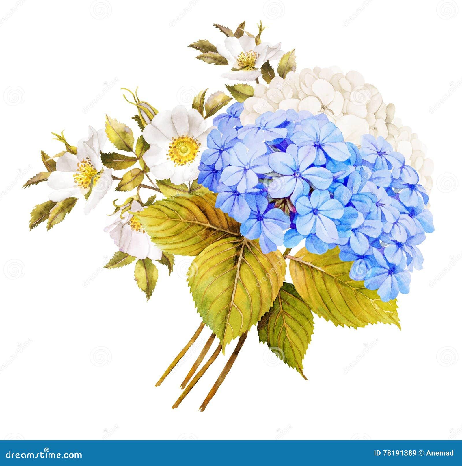 Błękitny białego kwiatu ślubny bukiet Akwareli hortensja, róże a