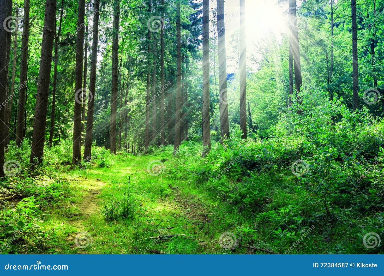 Błękitny Crimea głęboki krajobrazowy halny nieba lato Ukraine drzewa zbliżają łąkę i las na wzgórzach