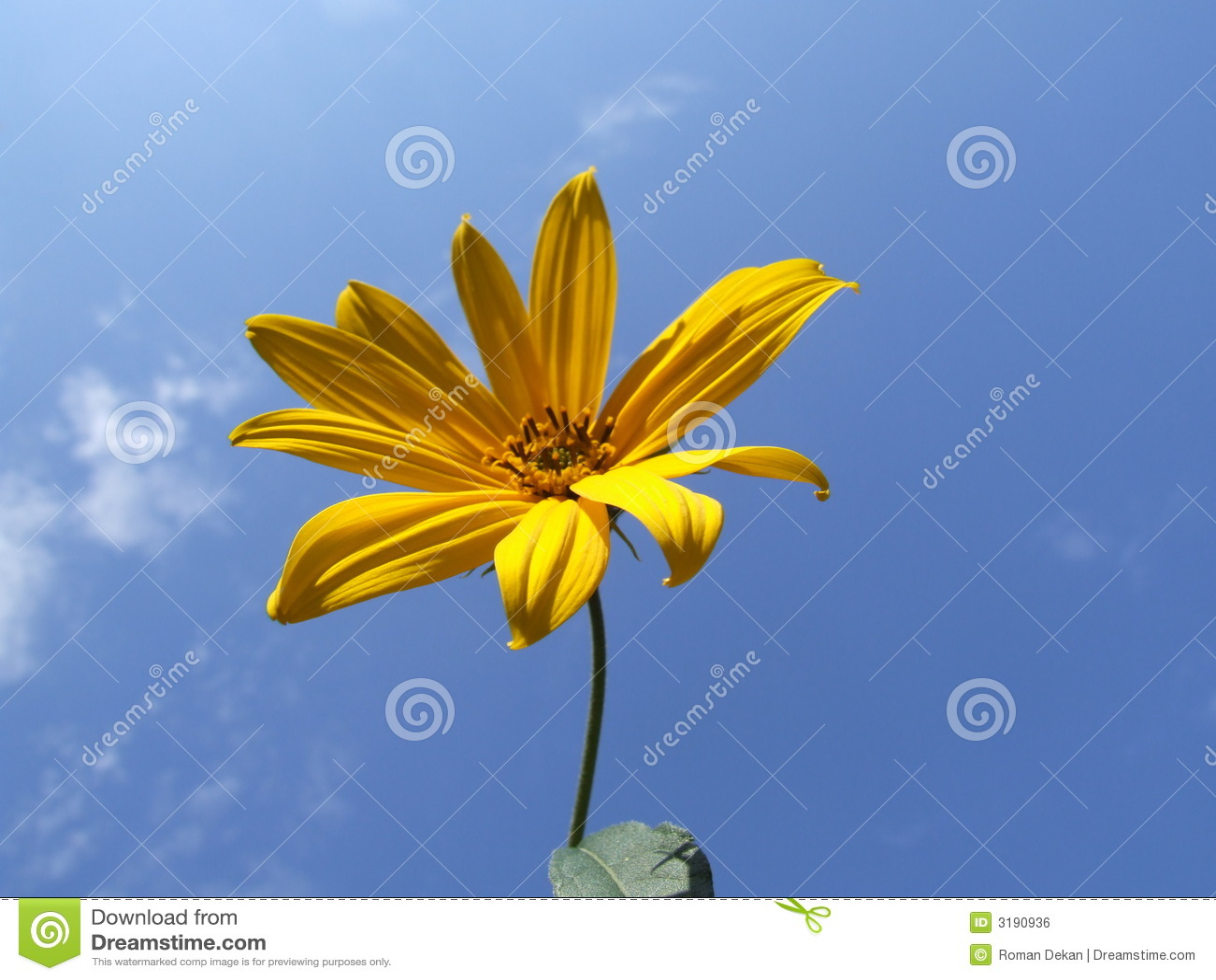 Błękitny kwiatek nieba żółty